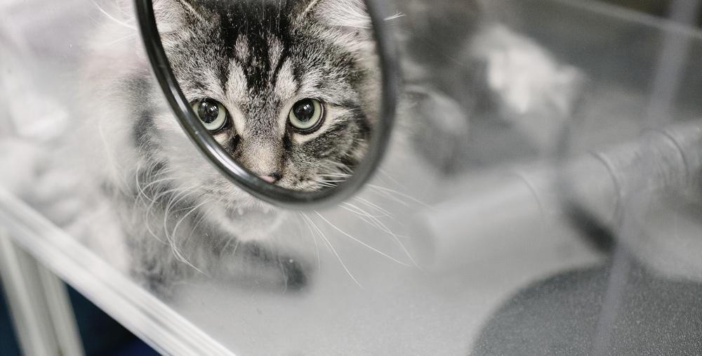 feline-grooming-canada.jpg