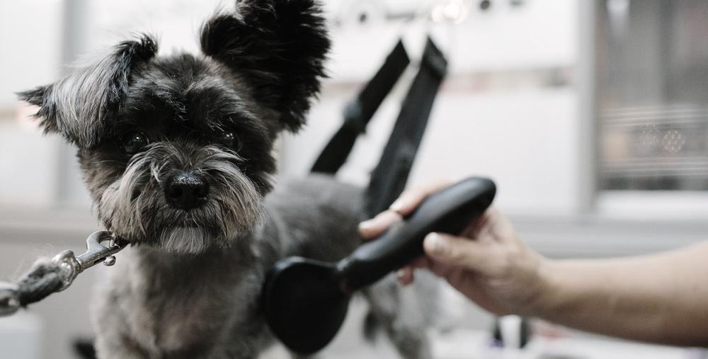 learn-to-groom-my-dog.jpg