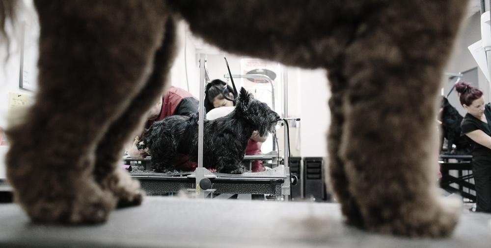 pet-grooming-technique.jpg