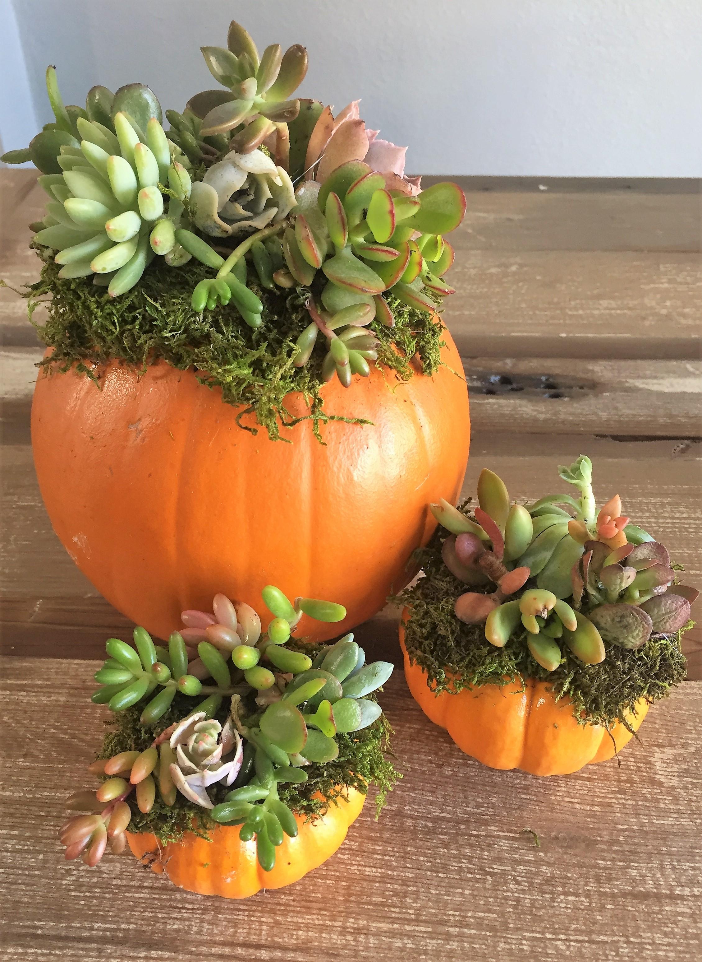 pumpkin succulent  arrangement.JPG