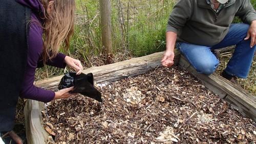 Creating a mushroom garden