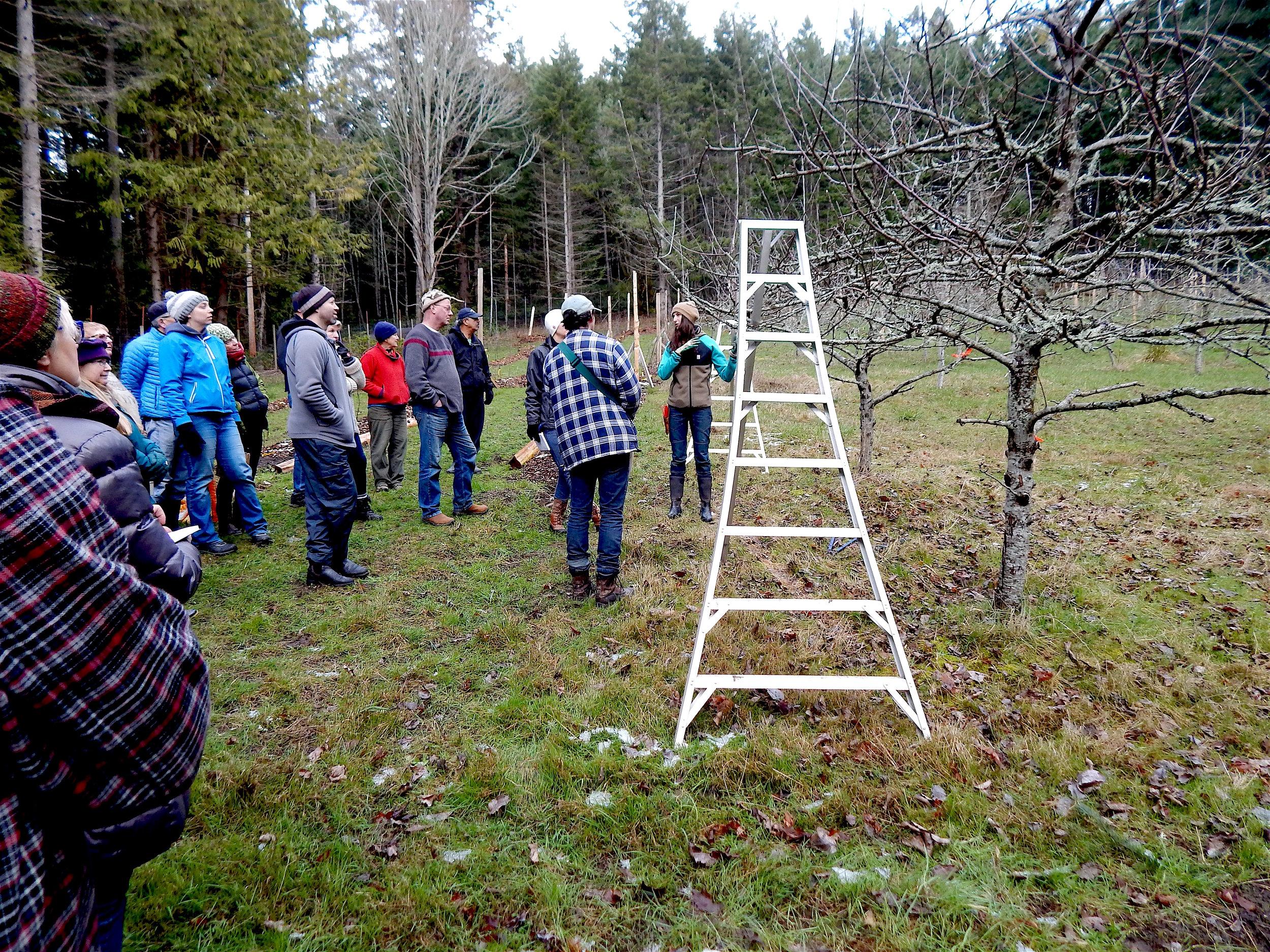 Pruning workshop 2018.jpg