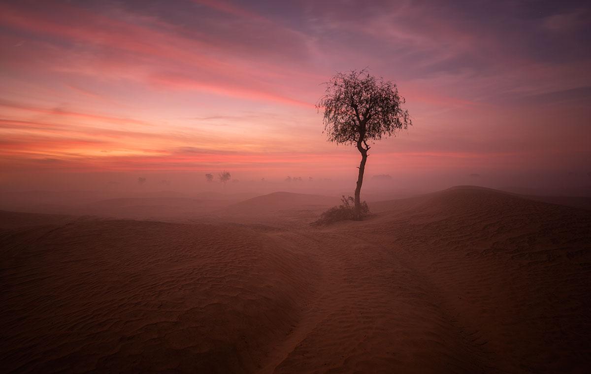 Sunrise at Maliha desert