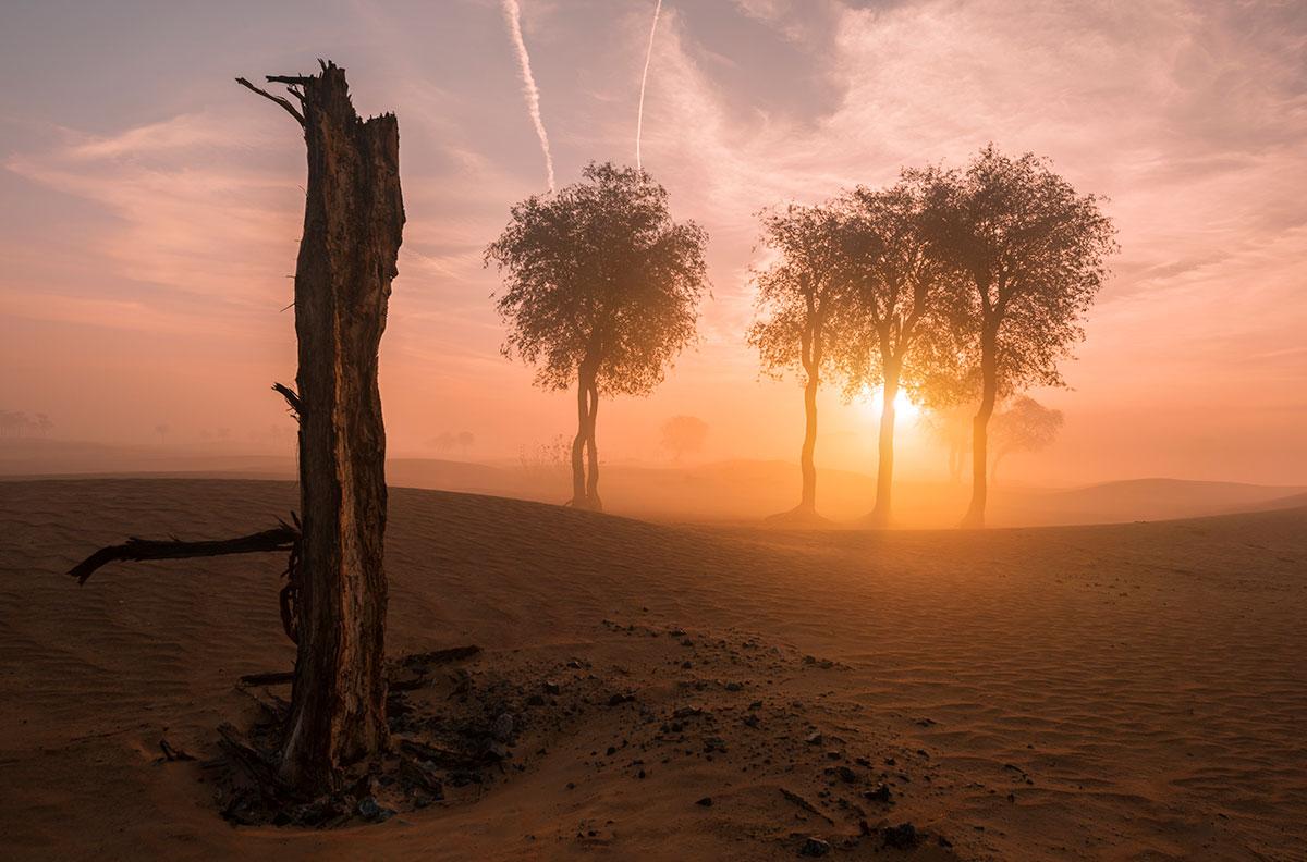 Maliha desert in Sharjah at sunrise