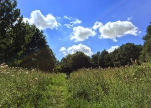 Park at Hampstead