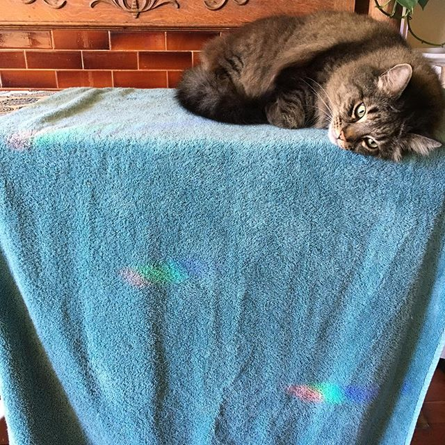 Some #oldfashioned #sanfrancisco #queer #pussy right here, #ladies #gents and those that #defythegenderbinary !!! .................. #queerpussy #rainbow #cleantowel #cat #beautifulcat #pride #sexworker #sexworkerofsf #queercatsofinstagram