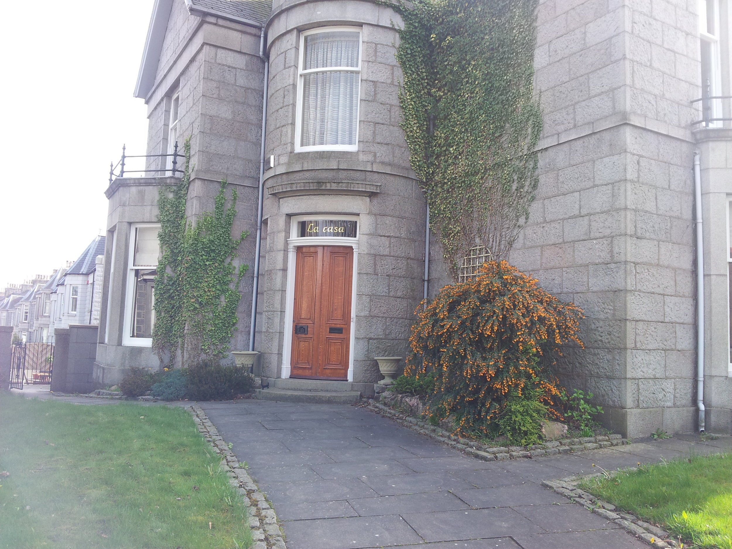 Before - Lawn, damaging ivy and overgrown shrubs