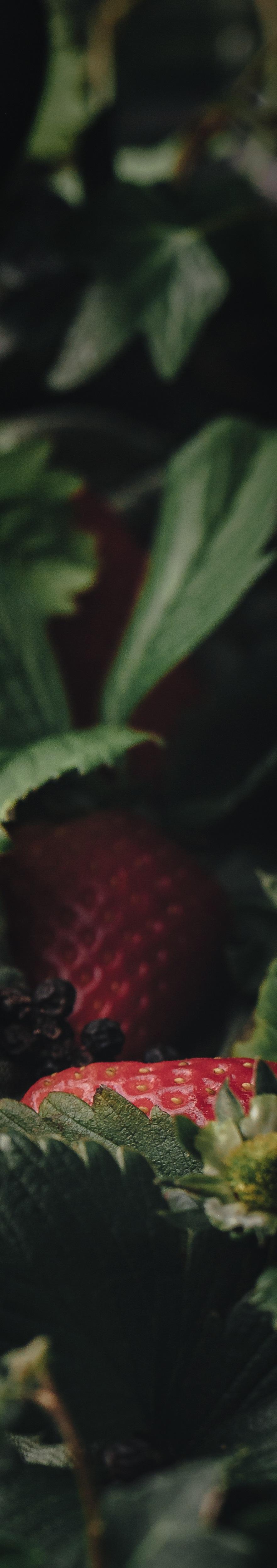 GGStrawberryCopyright+Faydit+Photography-1-2.jpg
