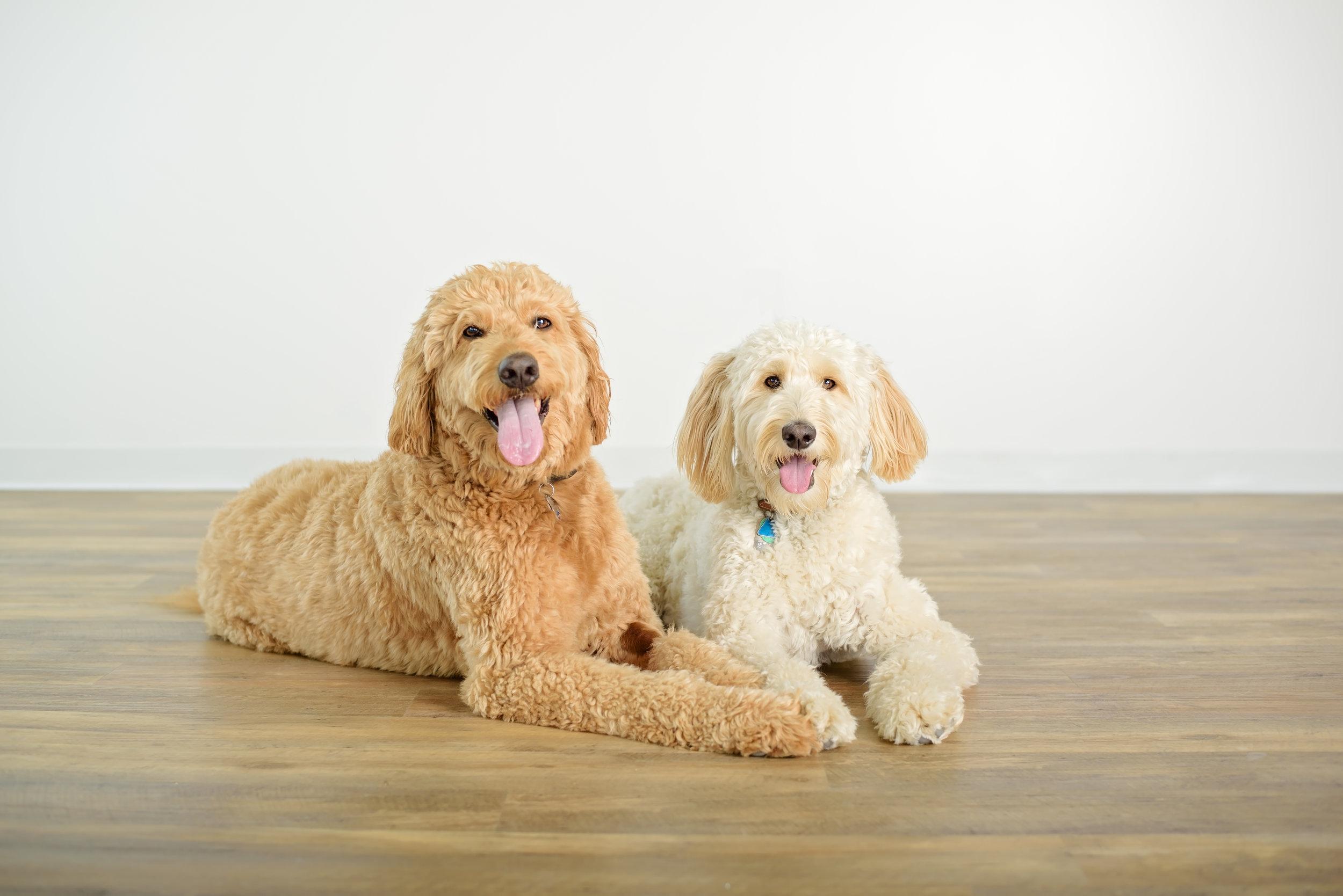 Bailey and Gracie-14.jpg