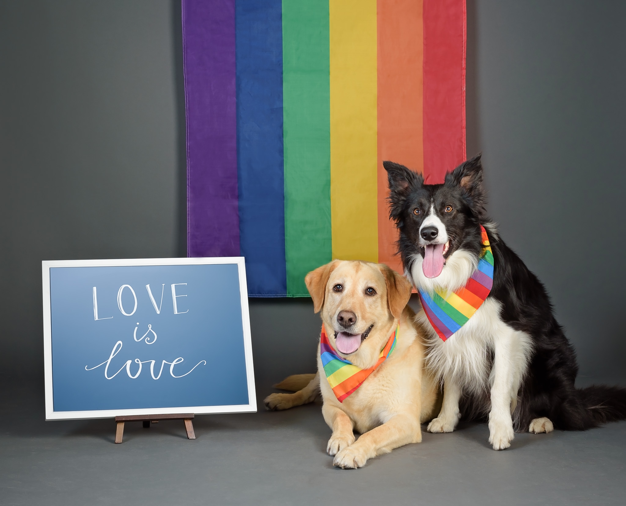 With Love & Dogs Project - Sharing messages of love, hope, kindness & equality