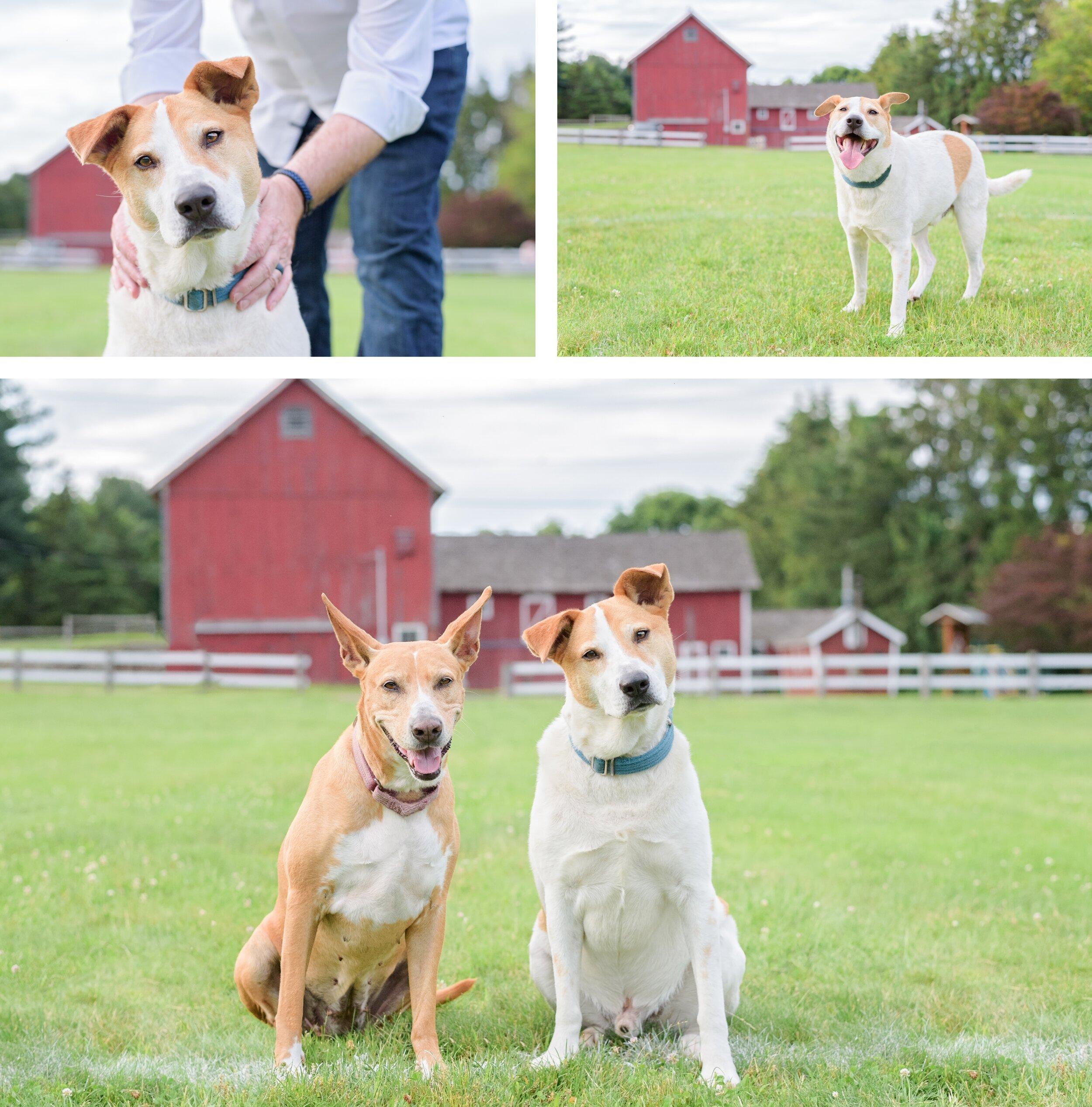 Connecticut Dog Photography.jpg