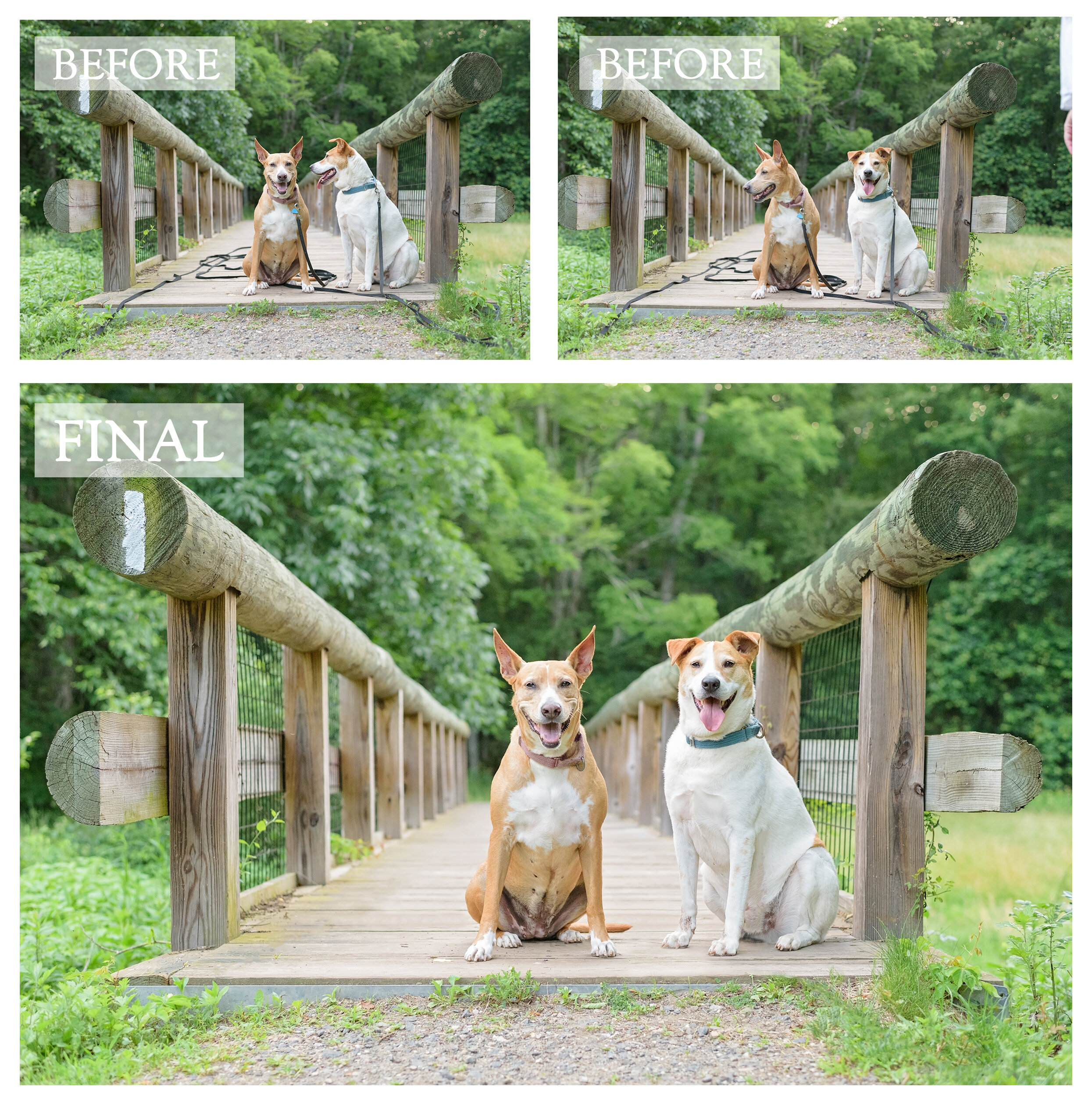 Connecticut Dog Photography Before and After.jpg