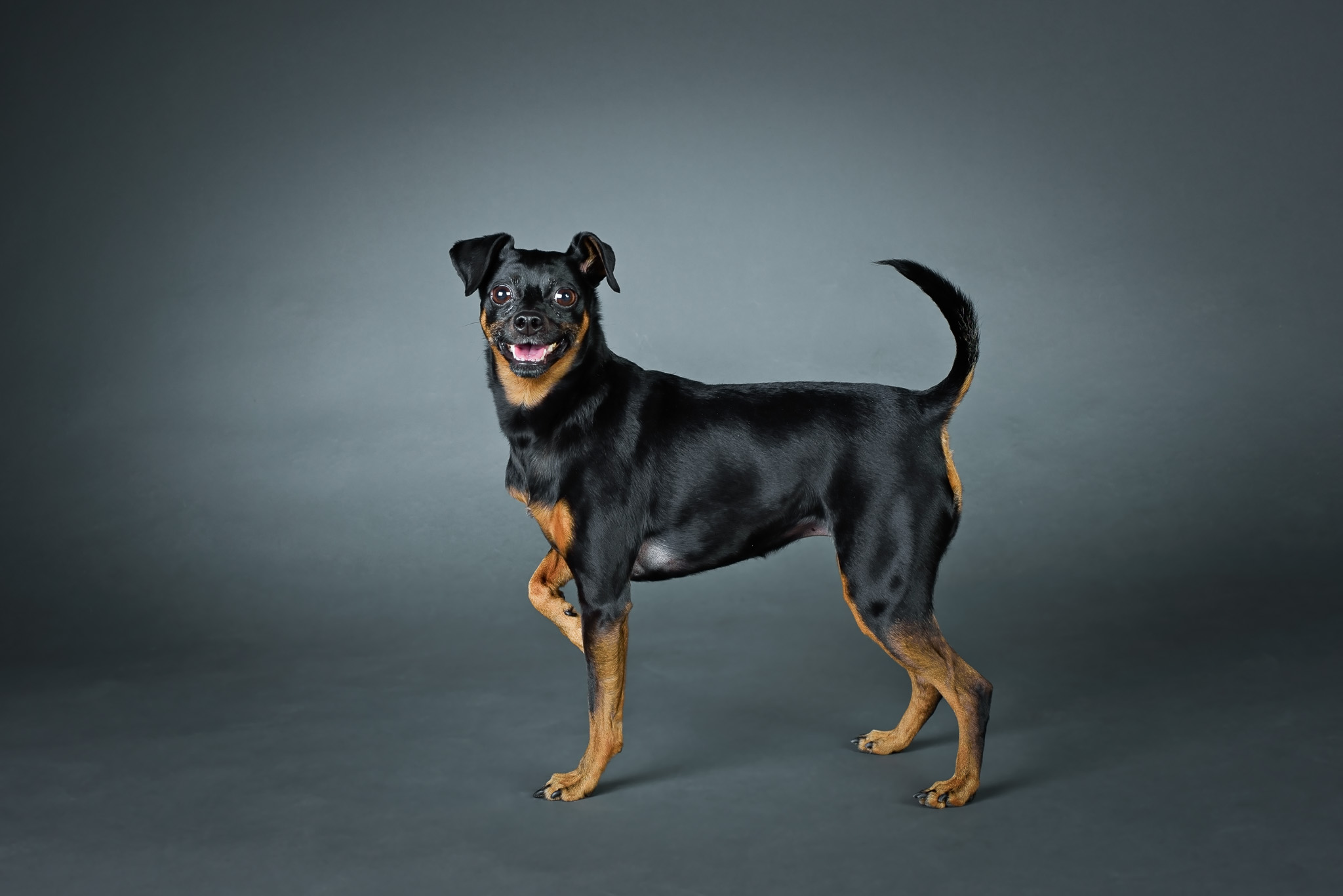 CT Studio Dog Photography
