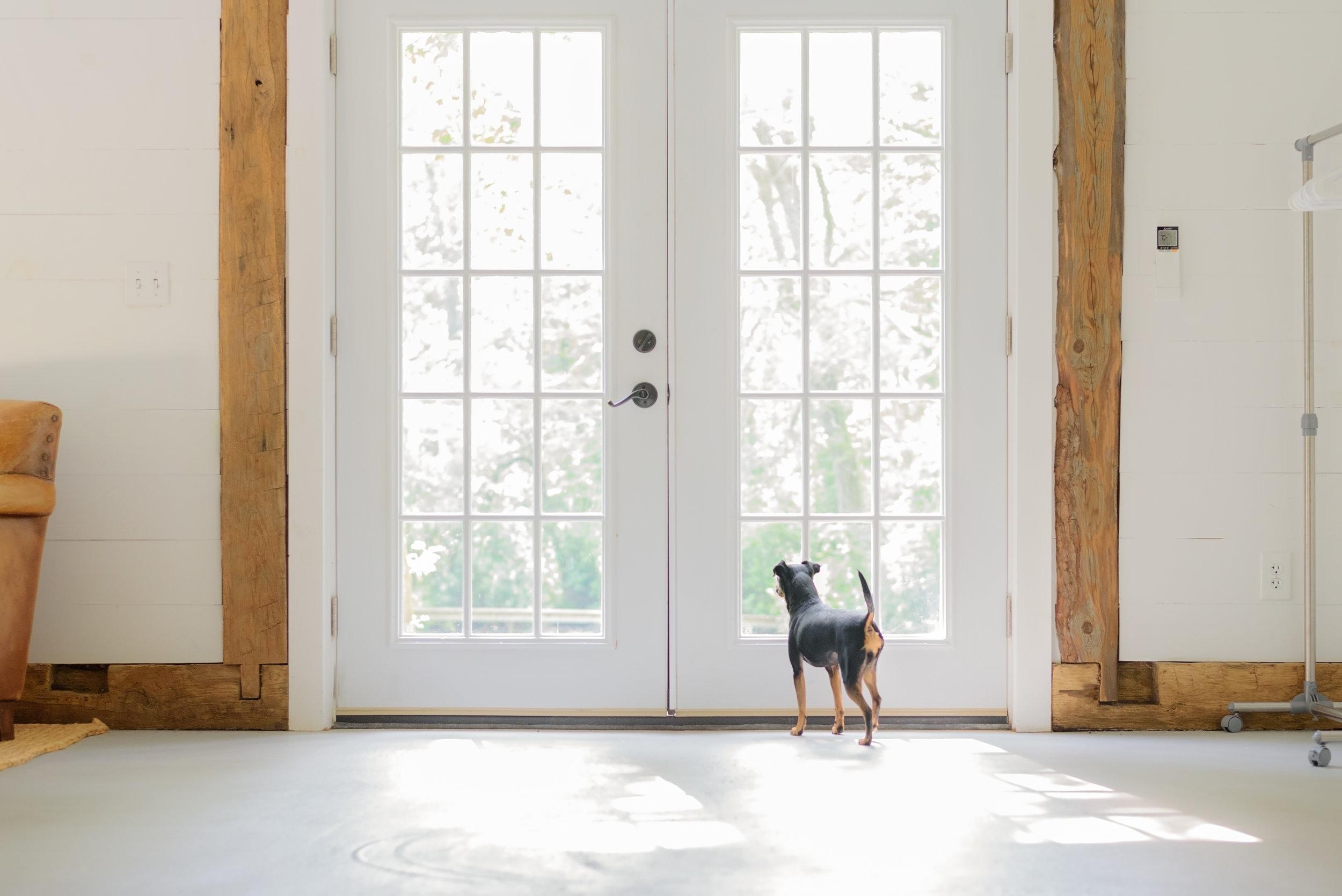 CT Studio Dog Photography.jpg