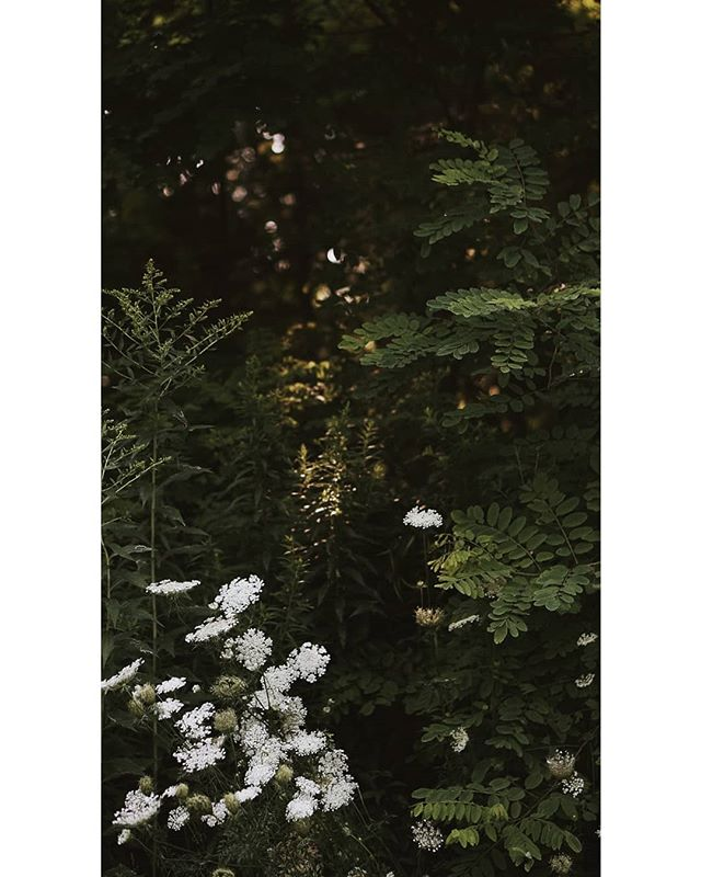 The Secret Garden 🌿  #wanderlust #wanderers #nature #naturelovers #naturephotography #documentingreality #exploretocreate #artofvisuals #offlineoutdoors #wanderingfilmmakers