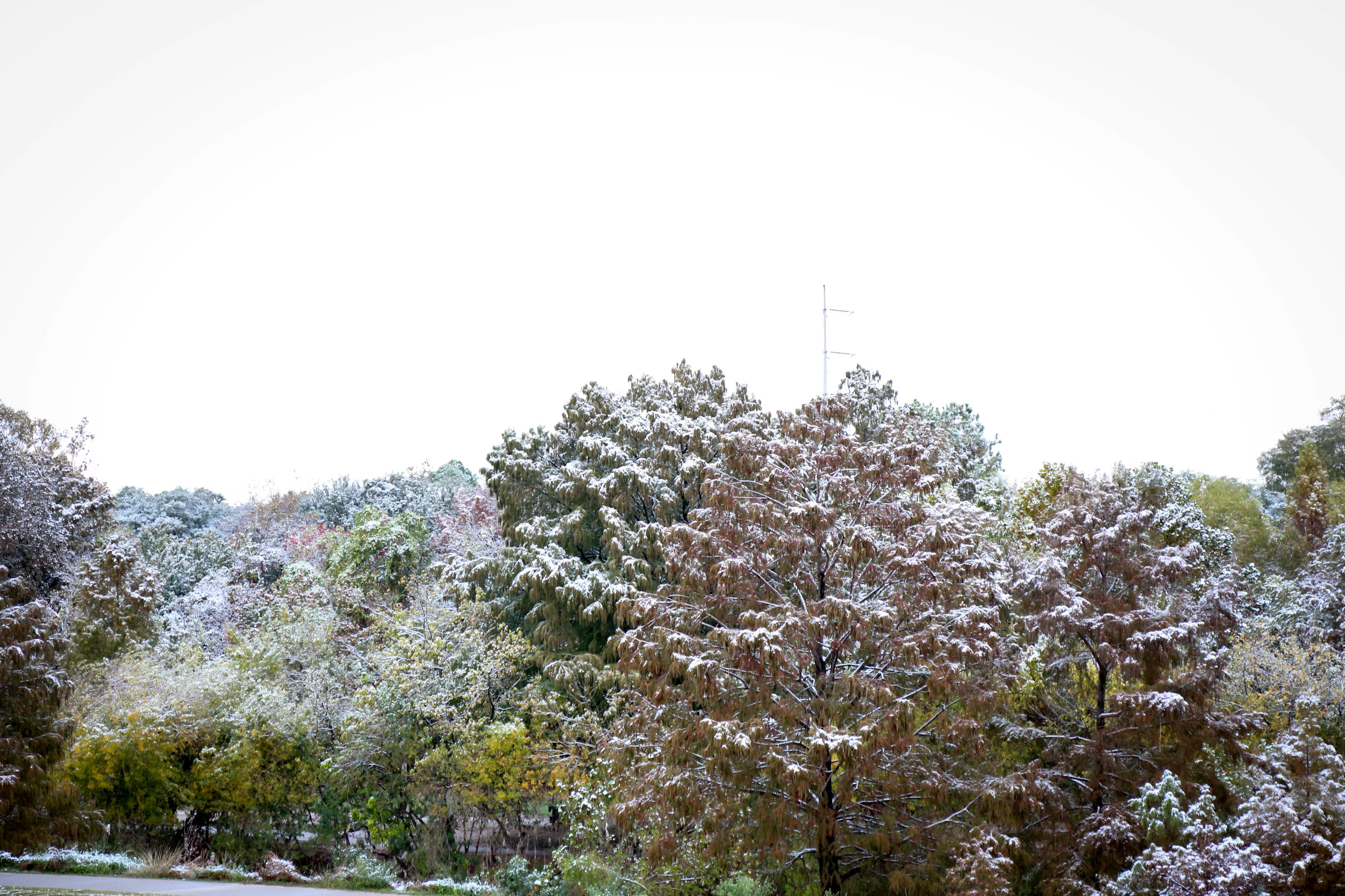 Snow 2 (1 of 1).jpg