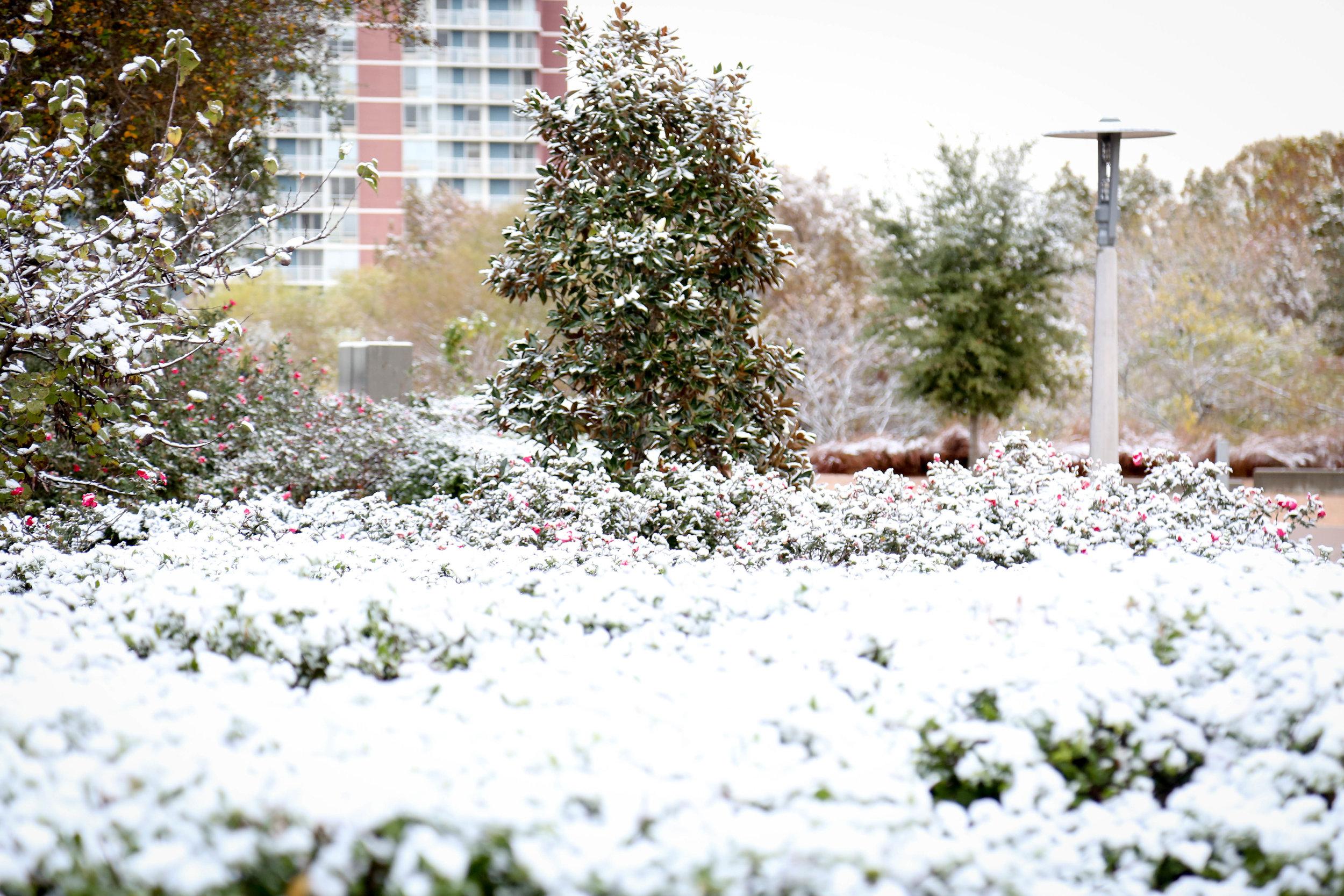 Snow 3 (1 of 1).jpg