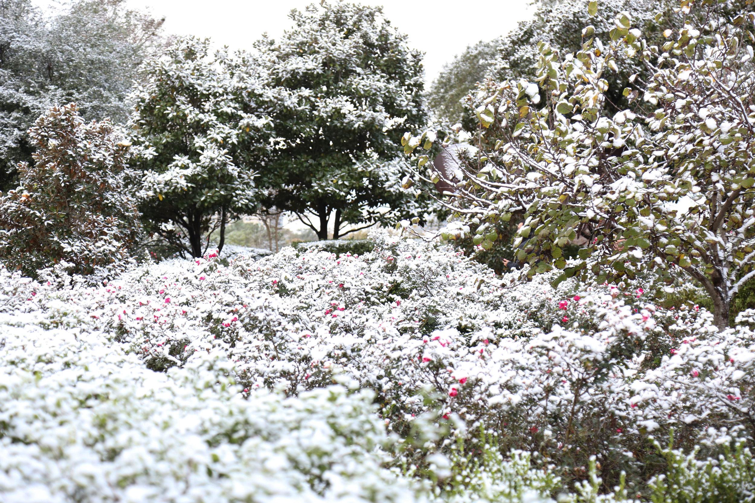 Snow 6 (1 of 1).jpg