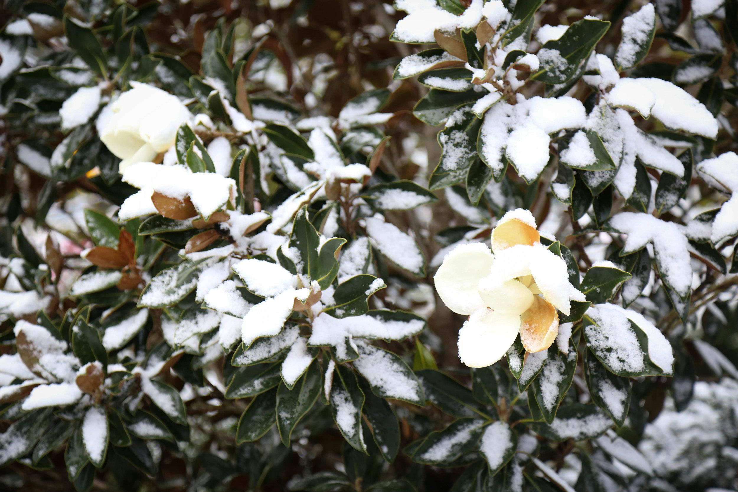 Snow 5 (1 of 1).jpg