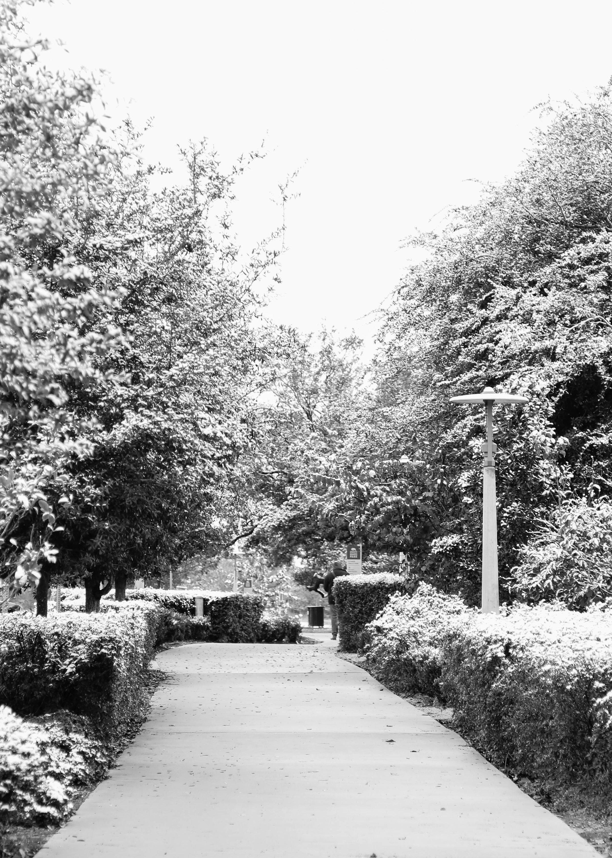 walk (1 of 1).jpg