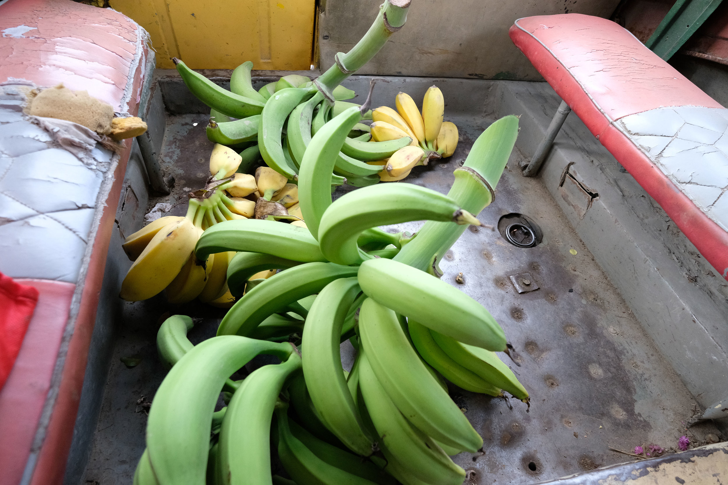 The Green bananas are for Plantains