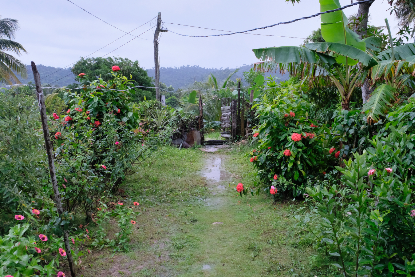 Path to the front gate, surrounded by tropical flowers