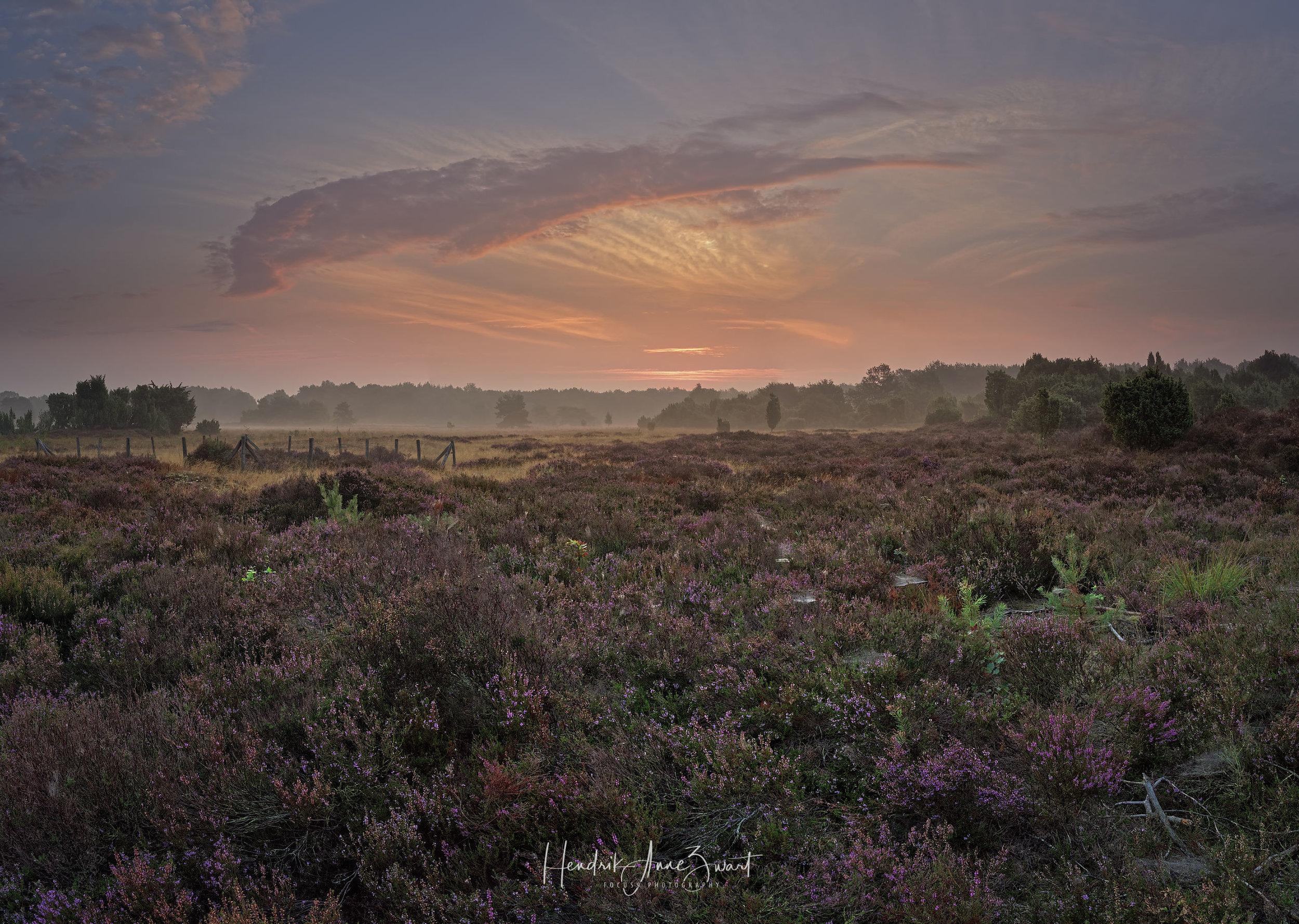 MantingerZand_Heide_Pano_Netherlands_1.jpg