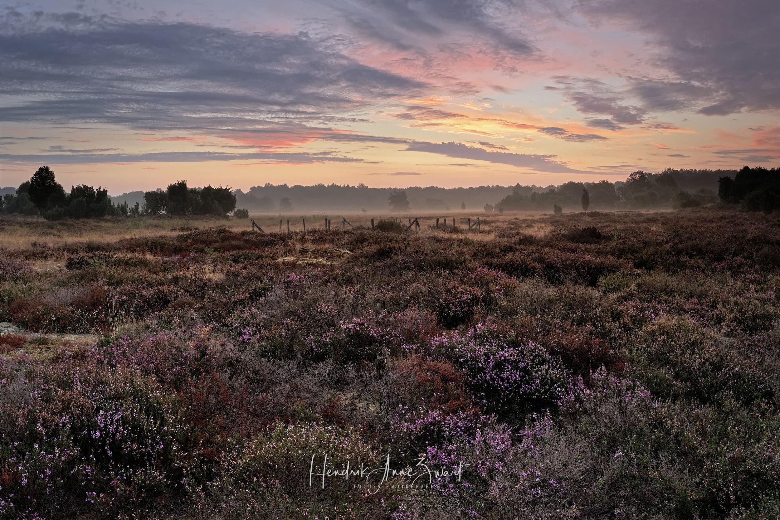 MantingerZand_Heide_Pano_Netherlands_10.jpg