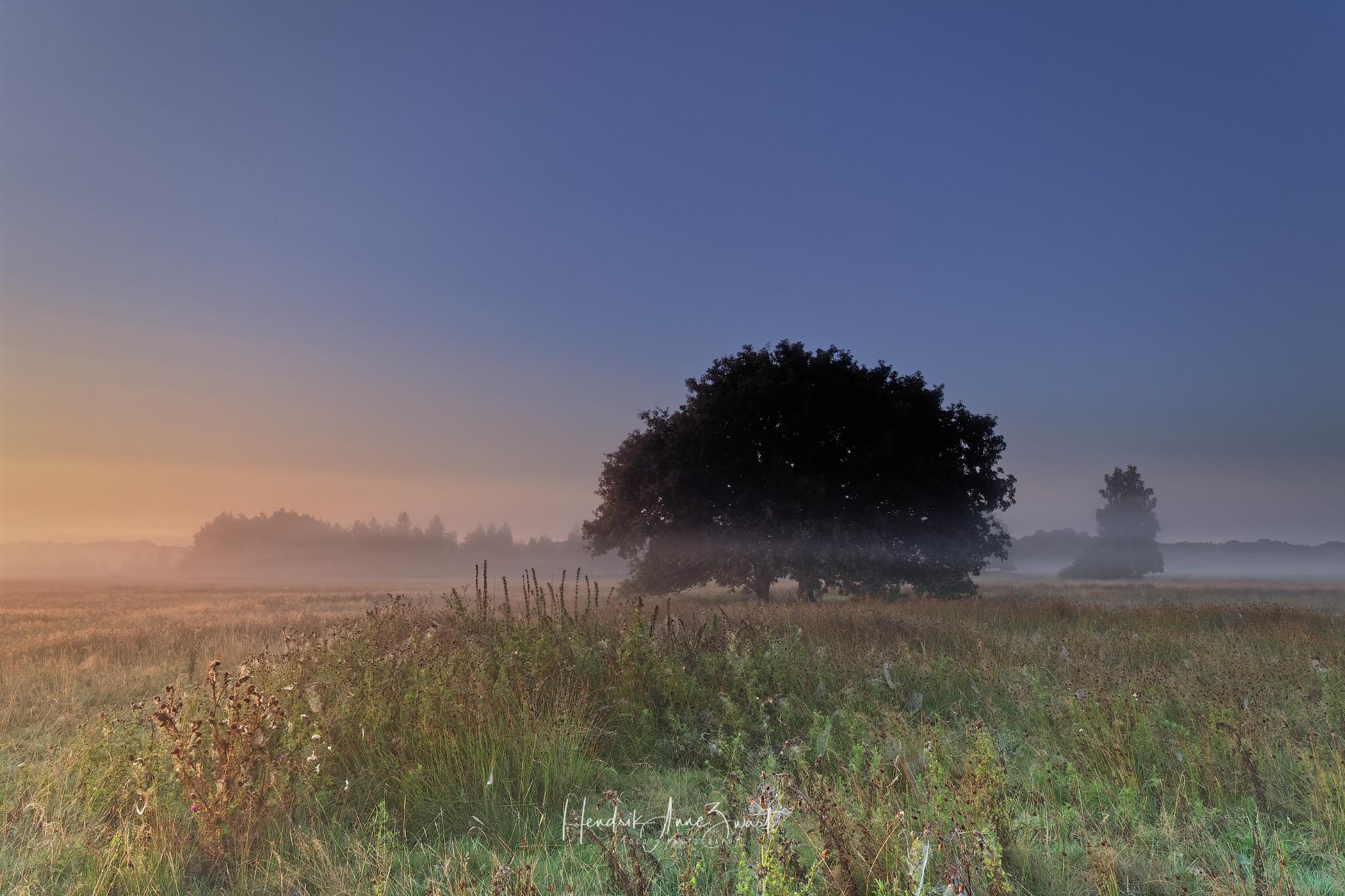 Orvelte_Heide_Netherlands_8.jpg