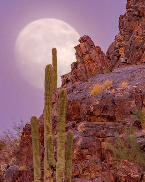 Super Moon, Phoenix, AZ