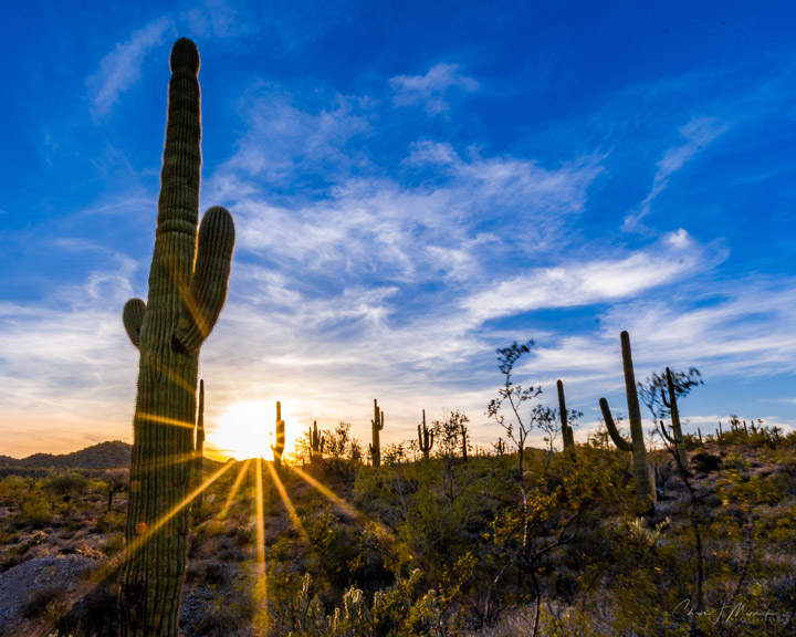 Desert Sunrays, Lake Pleasant, AZ