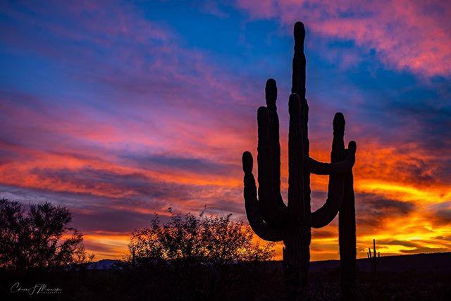 Amazing sunset tonight in the desert north of Phoenix. . . . #instagramaz #az365 #azfamily #az #goexploreaz #arizonalife #arizonahighways #igsouthwest #visitarizona #cbs5az #beon12 #fox10phoenix #nikonD750 nikonD500 #haidafilters #unrealaz #onlyinaz #onlyinaz2018 #desertlife #exploreaz #azlife #azcentral  #everythingarizona  #clouds #sunset #saguaro