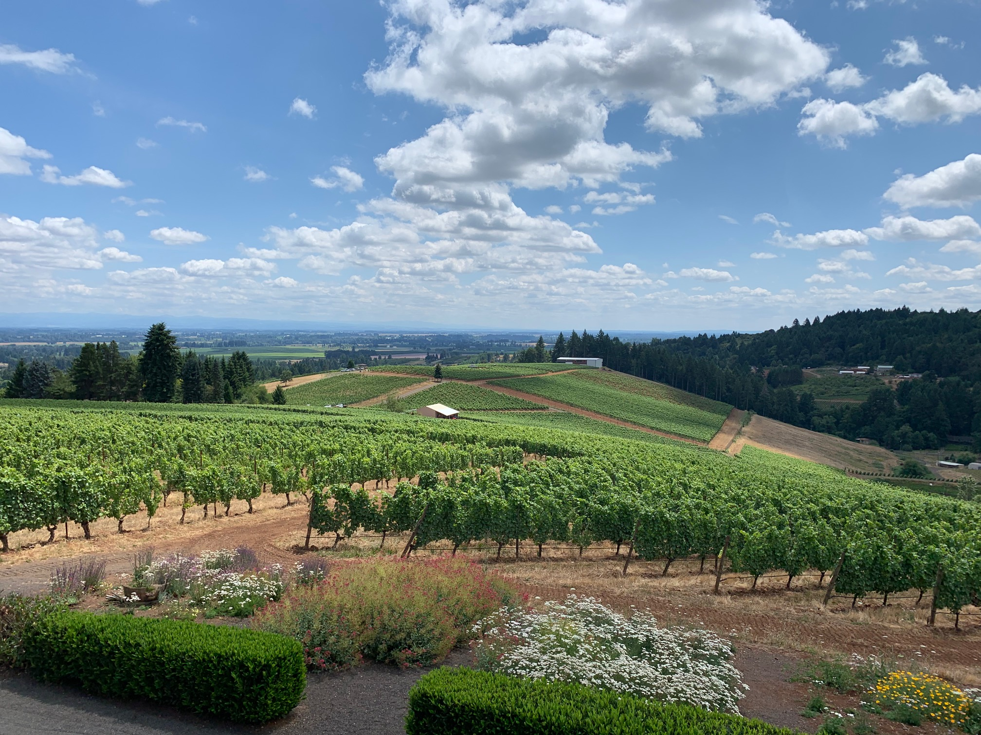 Winderlea: where the views and the wine are equally delightful