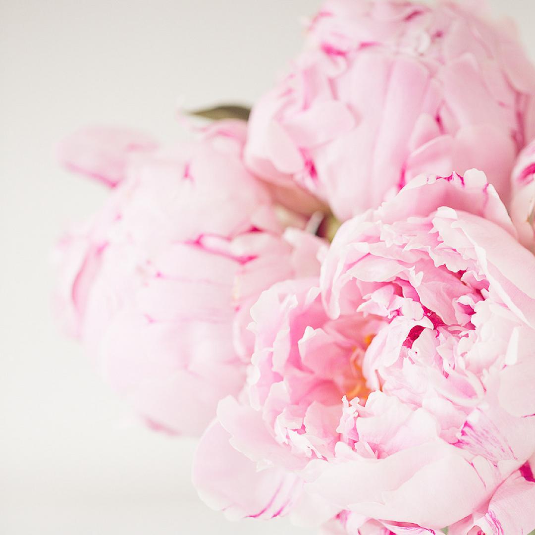 creative-roses.png