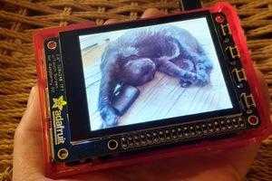 pi_cat.jpg