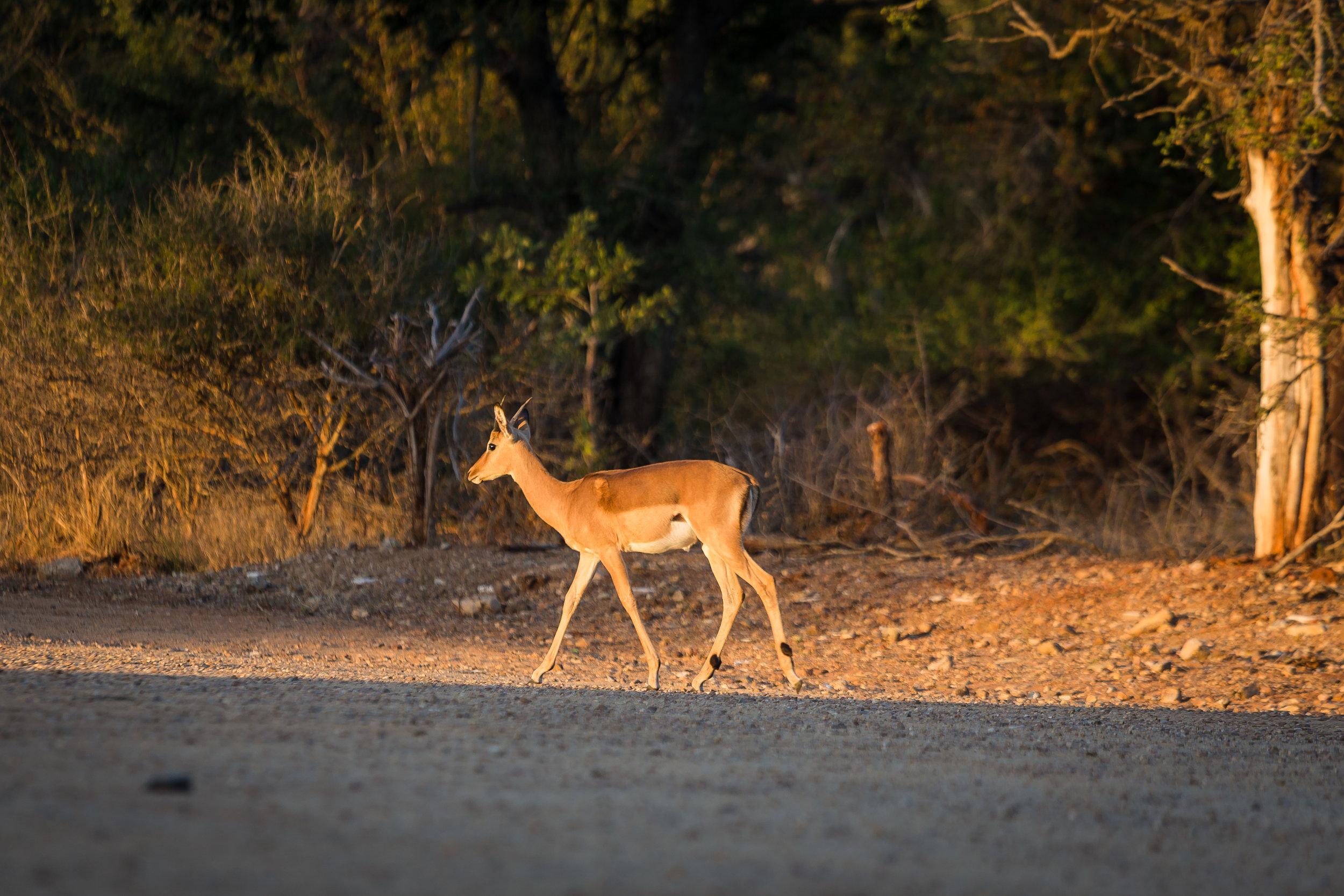 Kruger National Park World Challenge (2).jpg