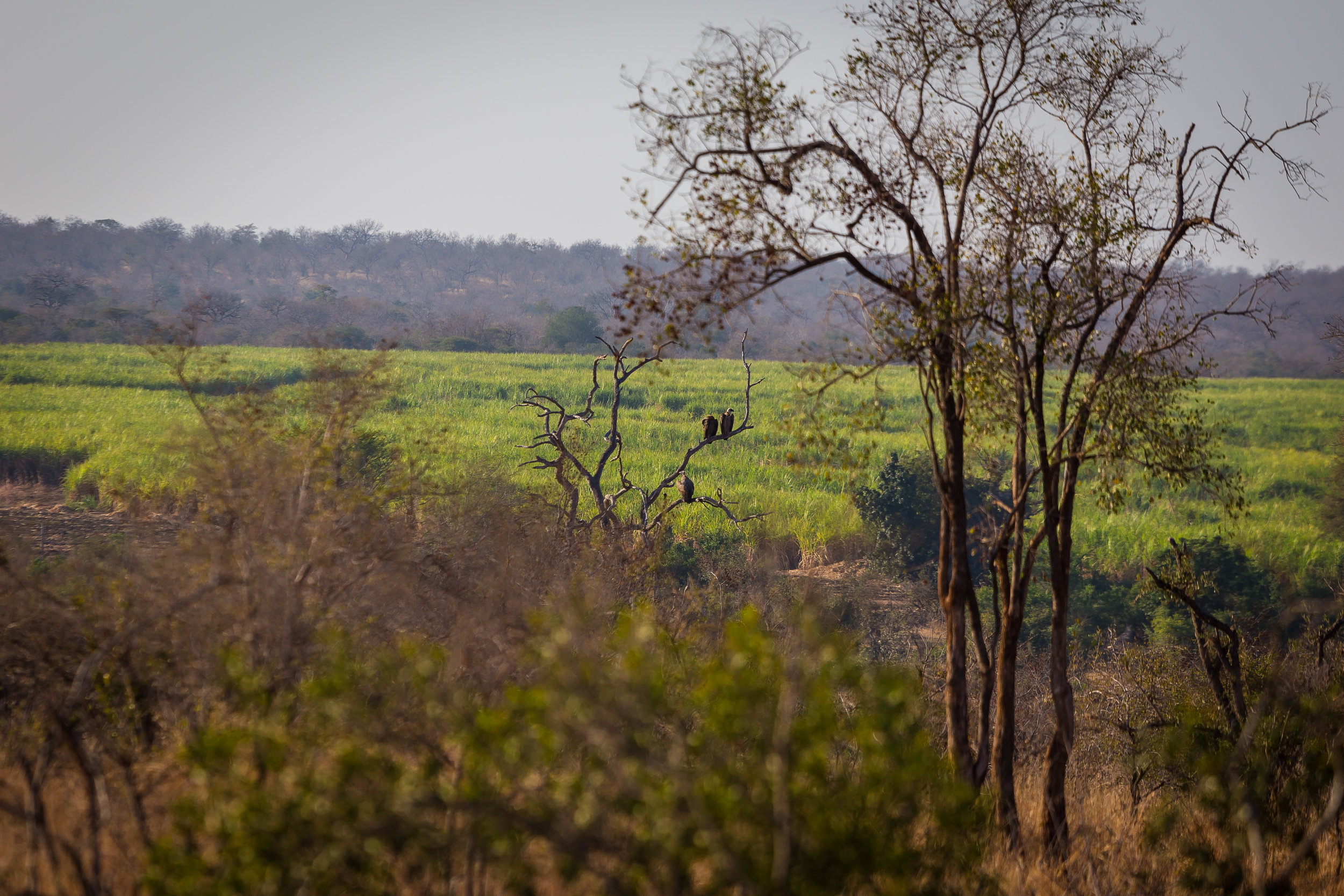 Kruger National Park World Challenge (7).jpg