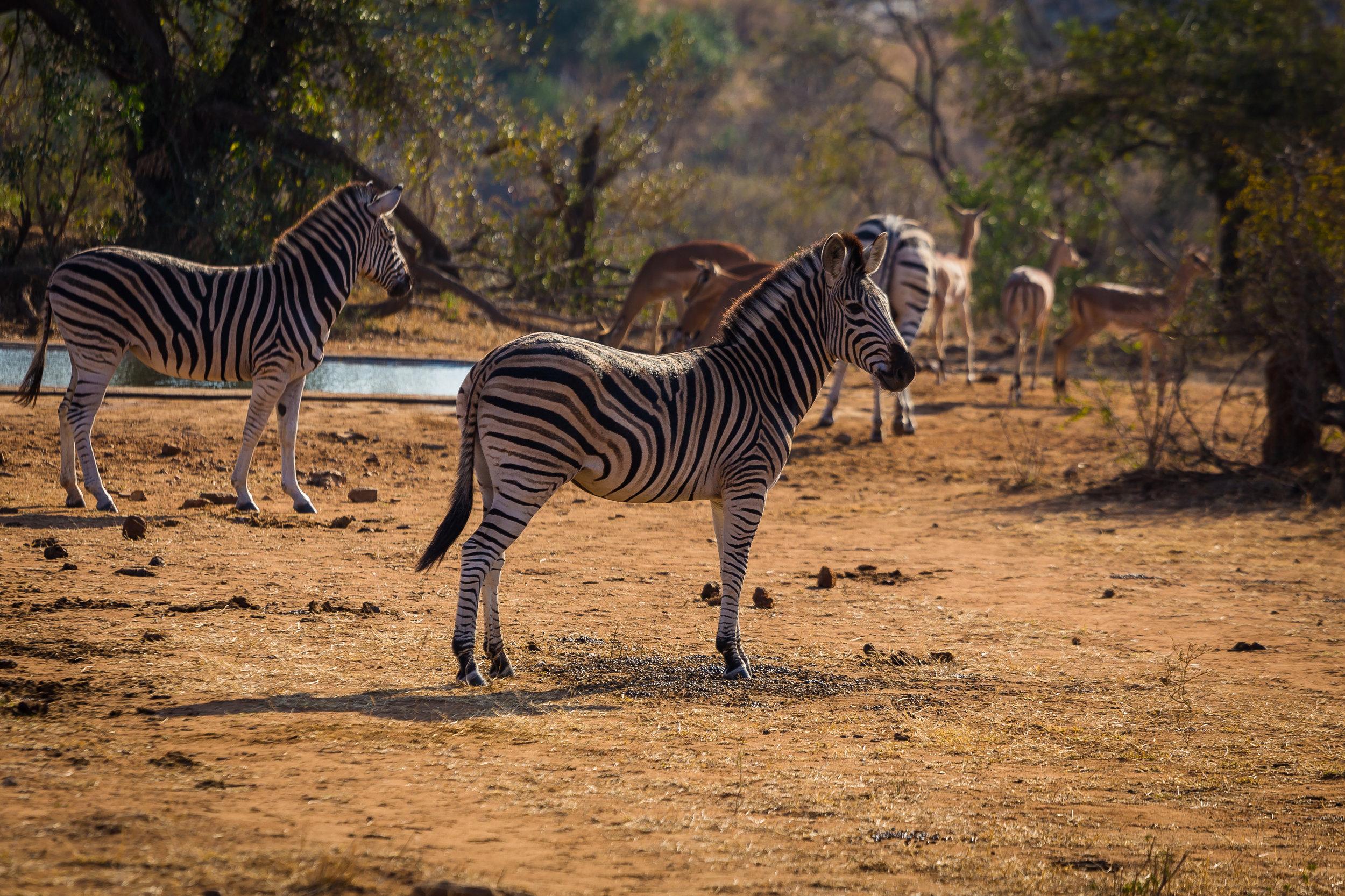 Kruger National Park World Challenge (9).jpg