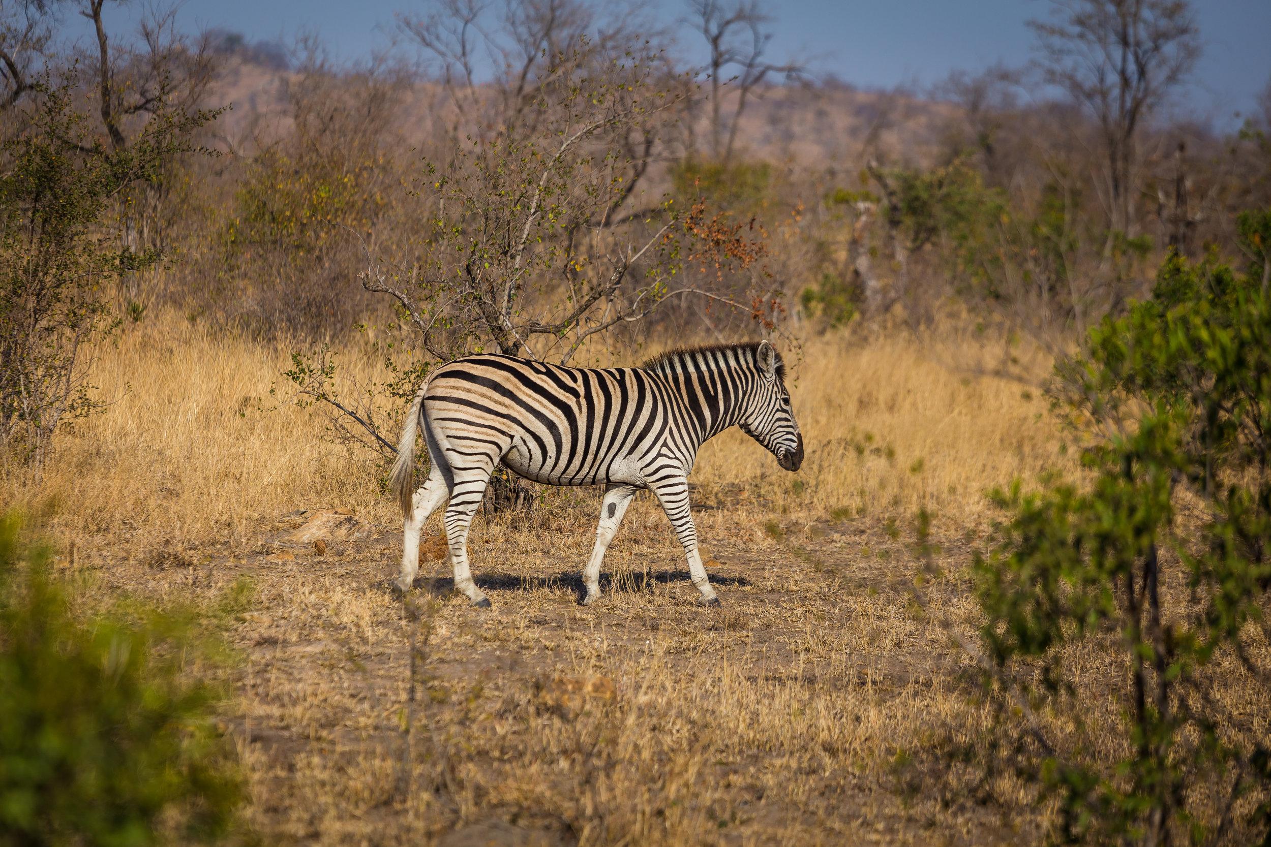 Kruger National Park World Challenge (8).jpg