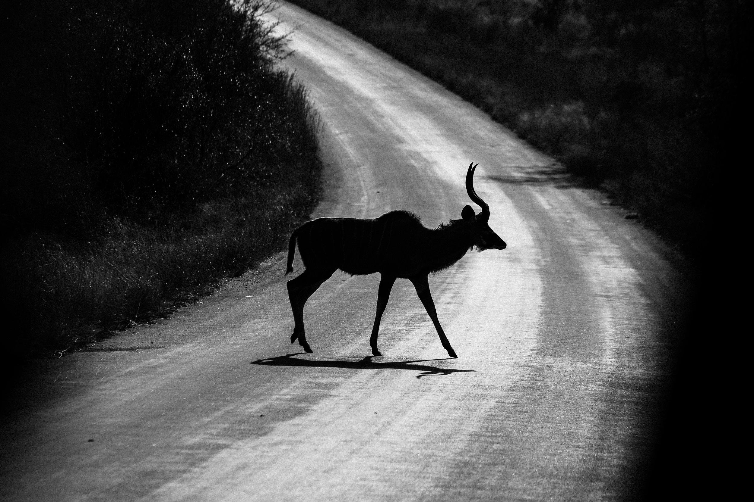 Kruger National Park World Challenge (10).jpg