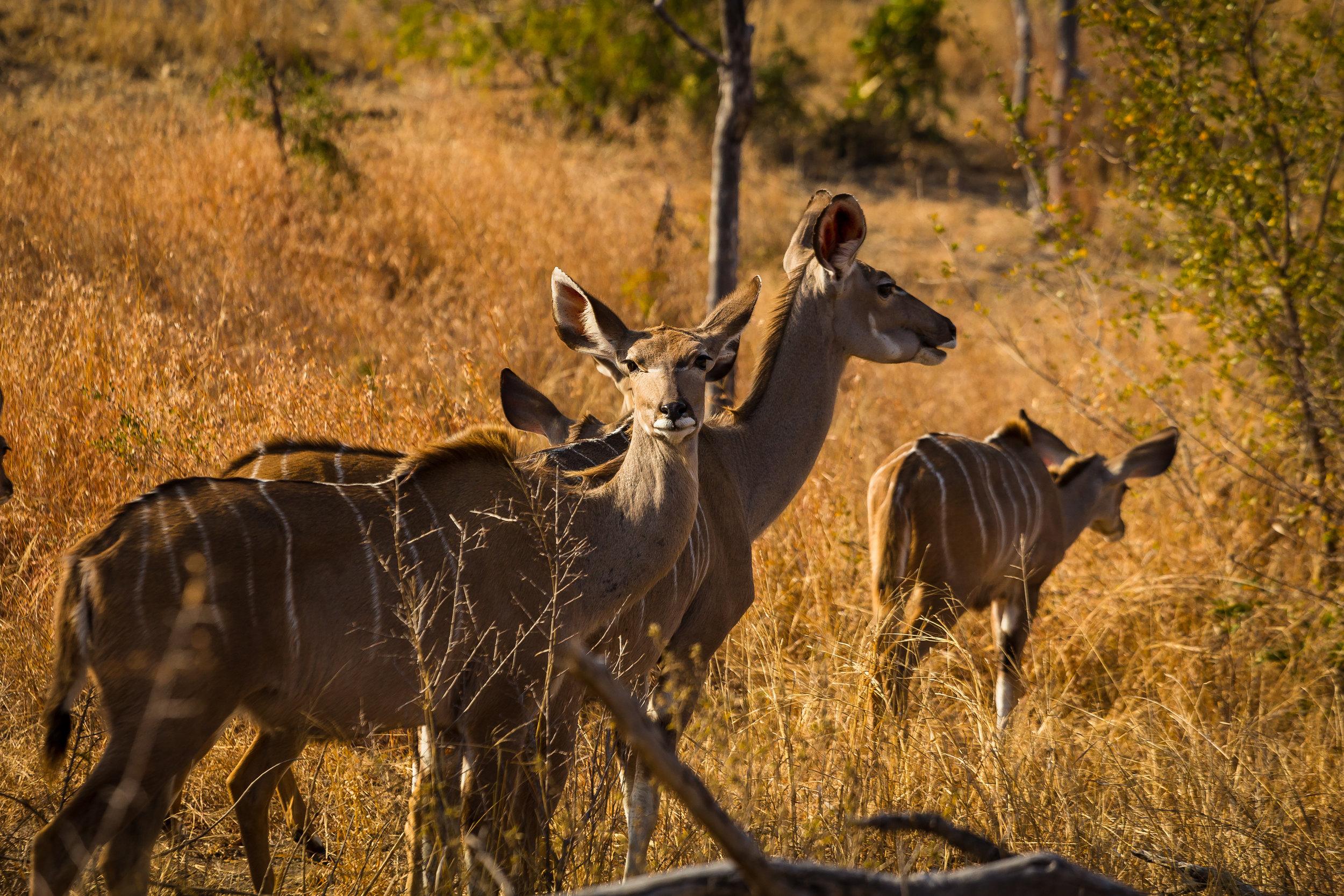 Kruger National Park World Challenge (11).jpg