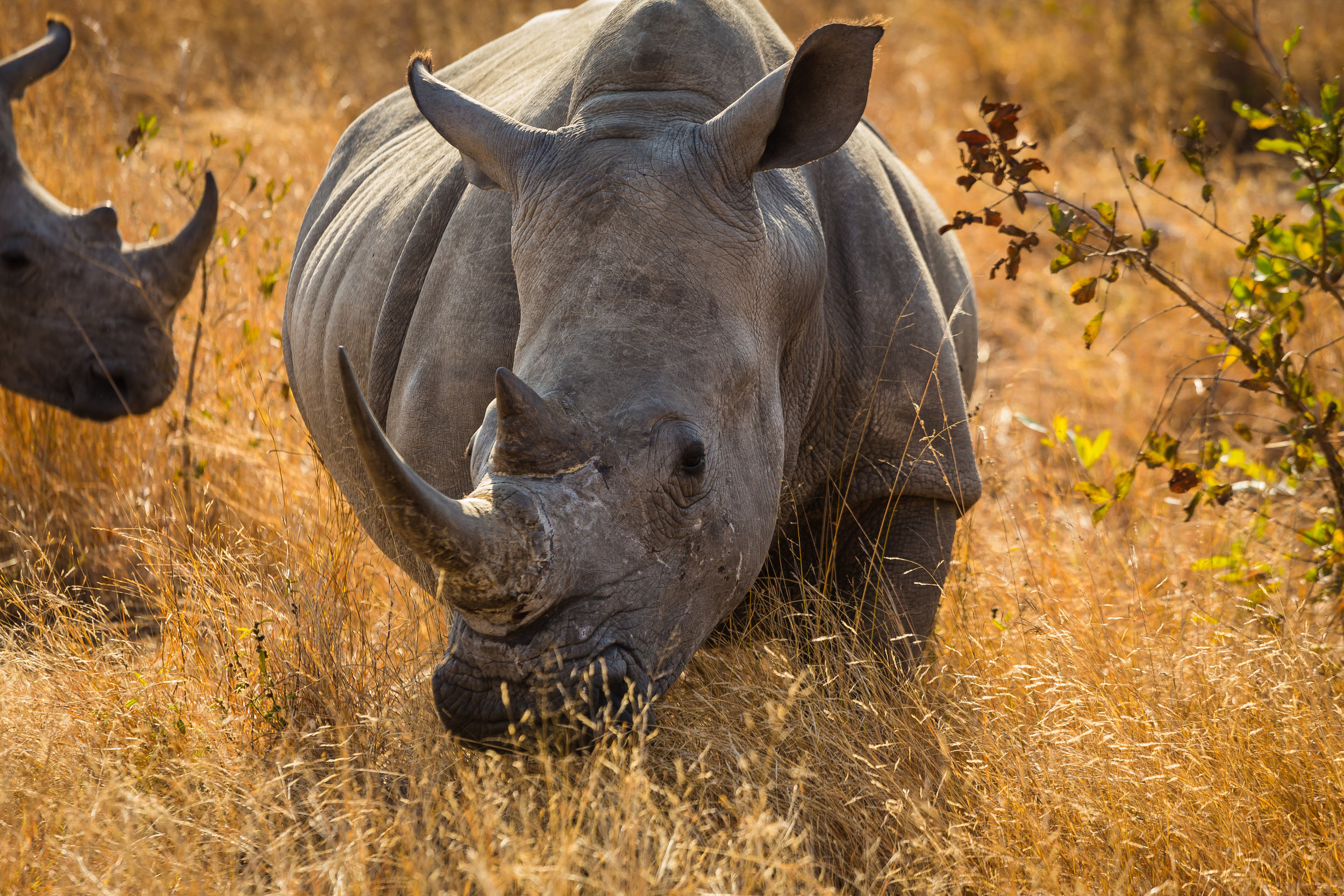 Kruger National Park World Challenge (12).jpg