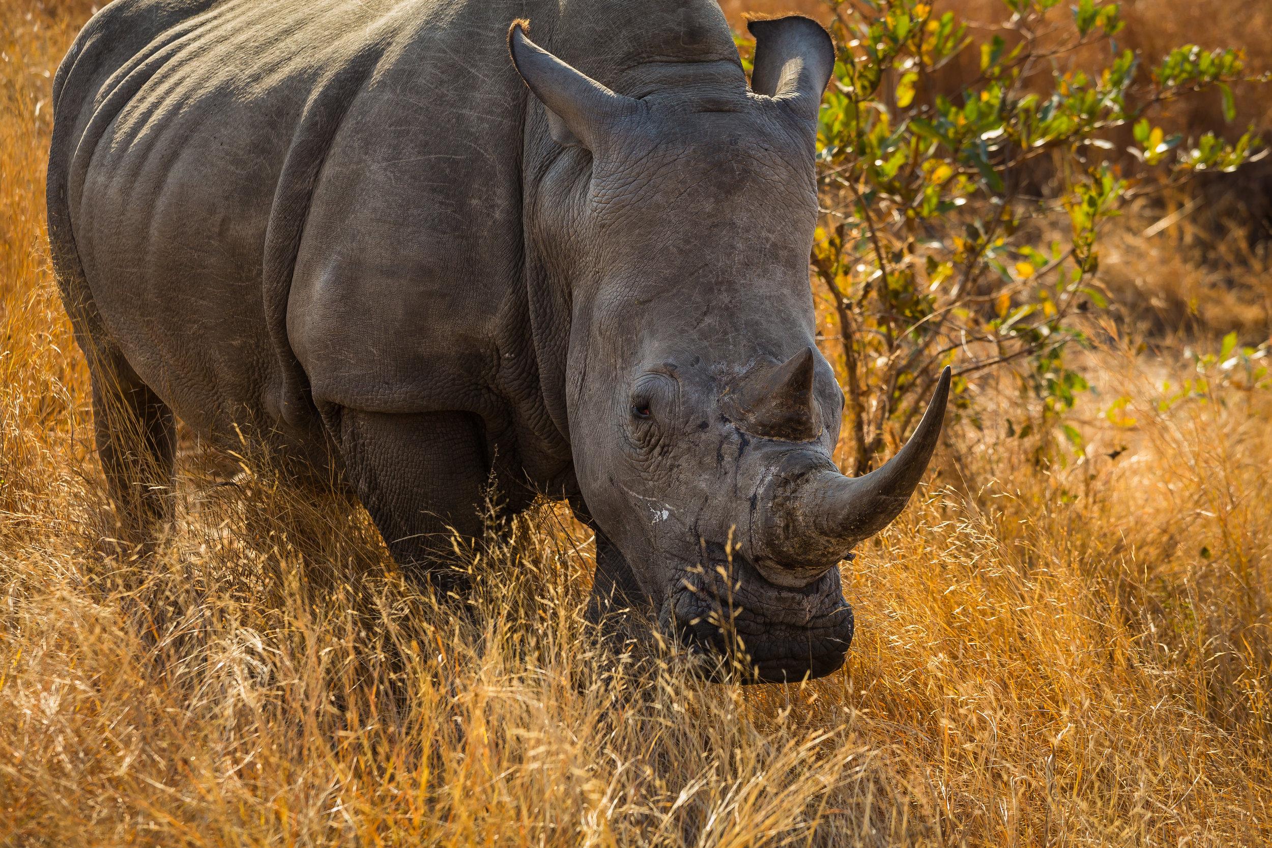 Kruger National Park World Challenge (13).jpg