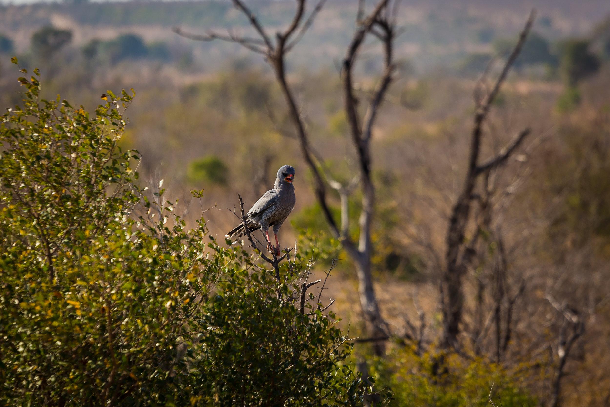 Kruger National Park World Challenge (15).jpg
