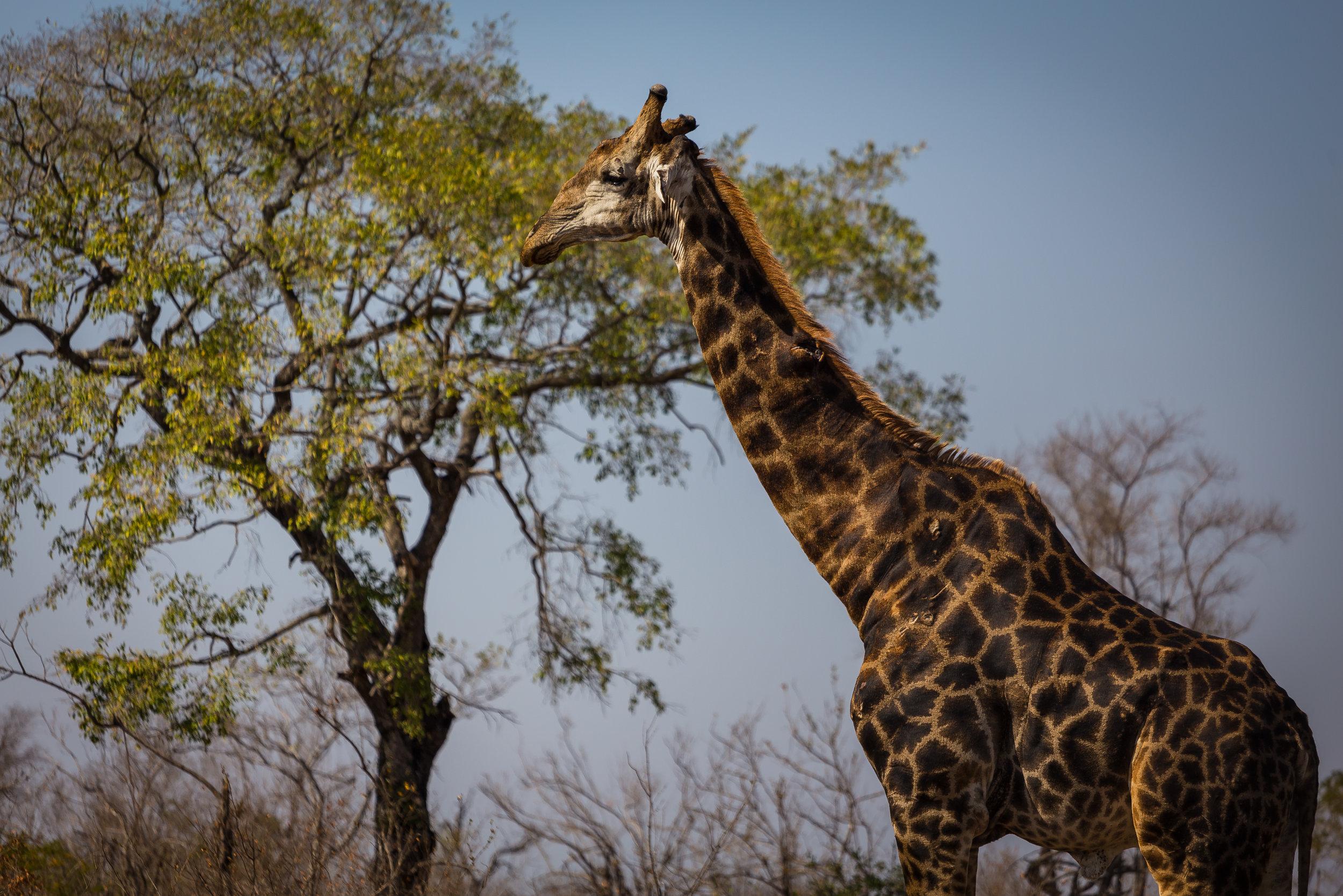 Kruger National Park World Challenge (16).jpg