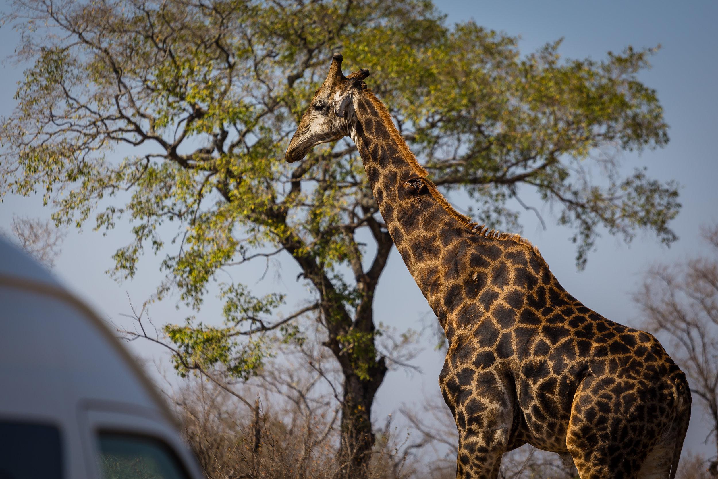 Kruger National Park World Challenge (17).jpg