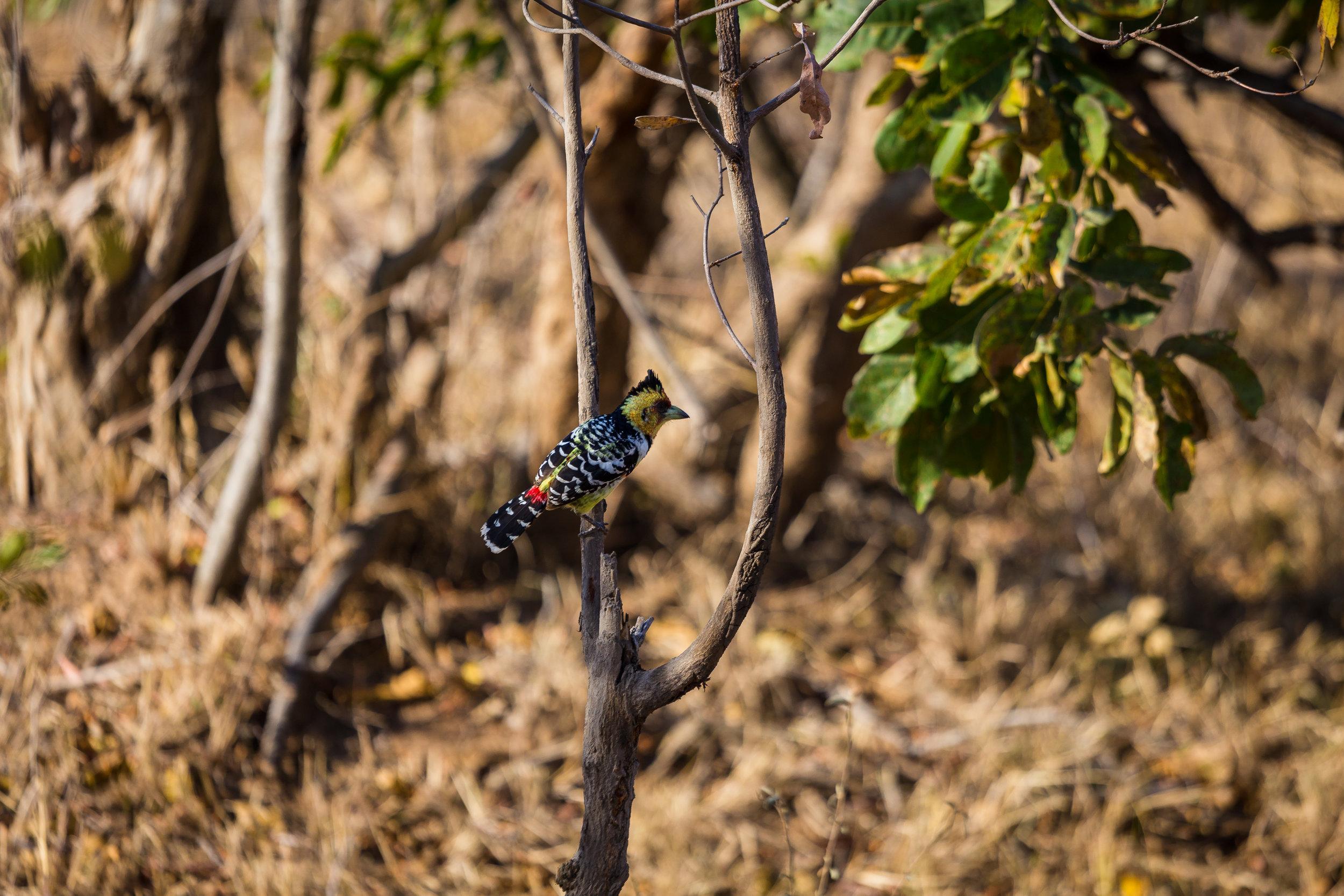 Kruger National Park World Challenge (19).jpg