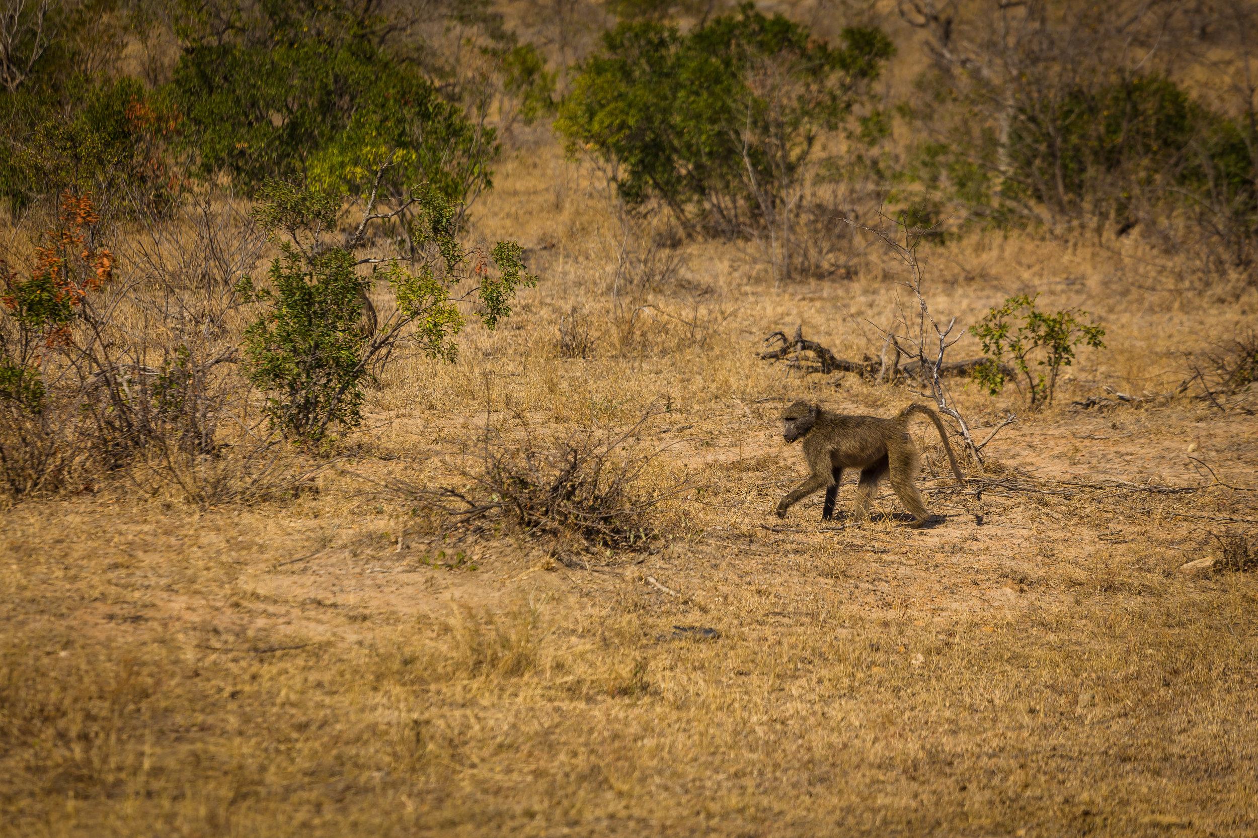 Kruger National Park World Challenge (18).jpg