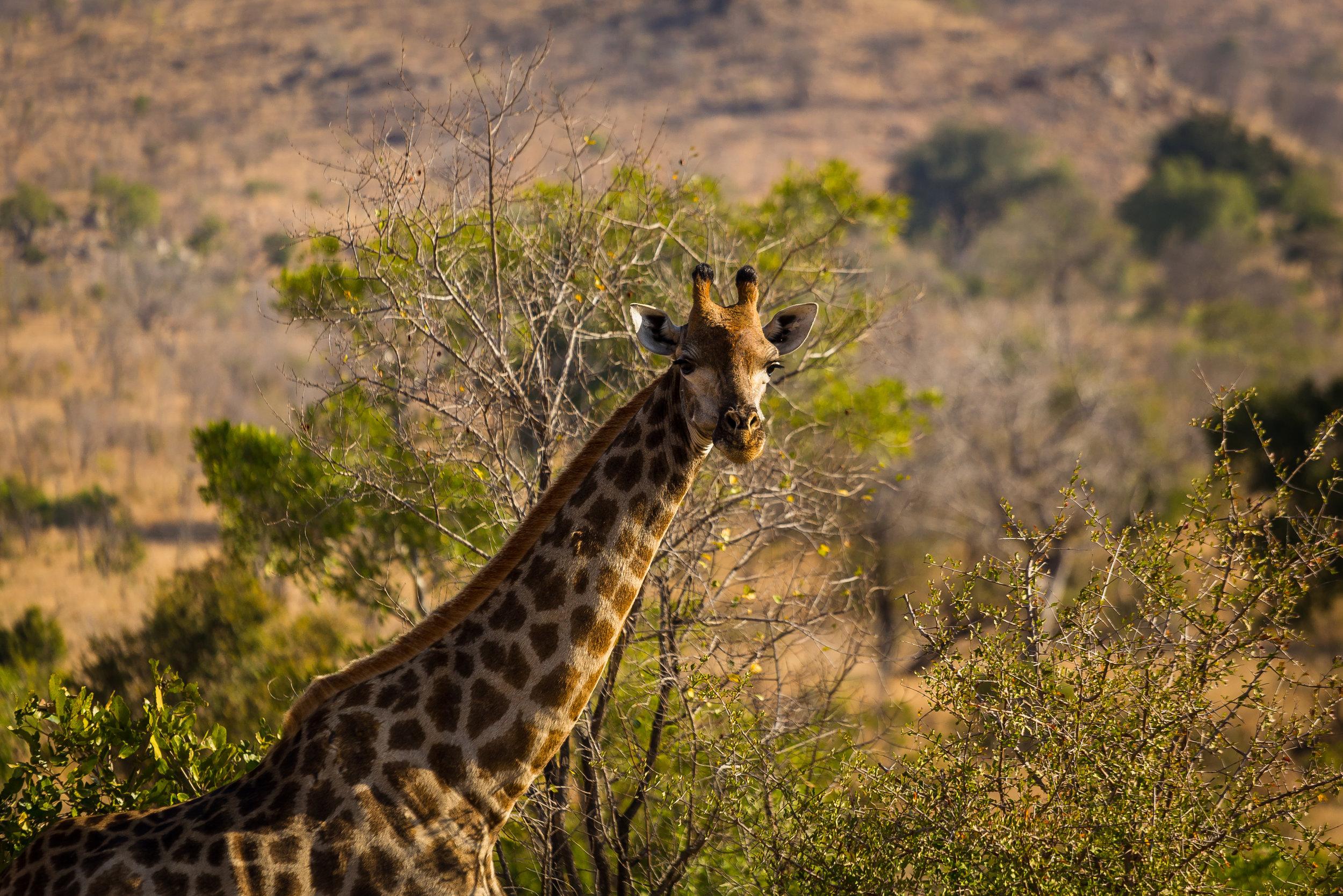 Kruger National Park World Challenge (20).jpg