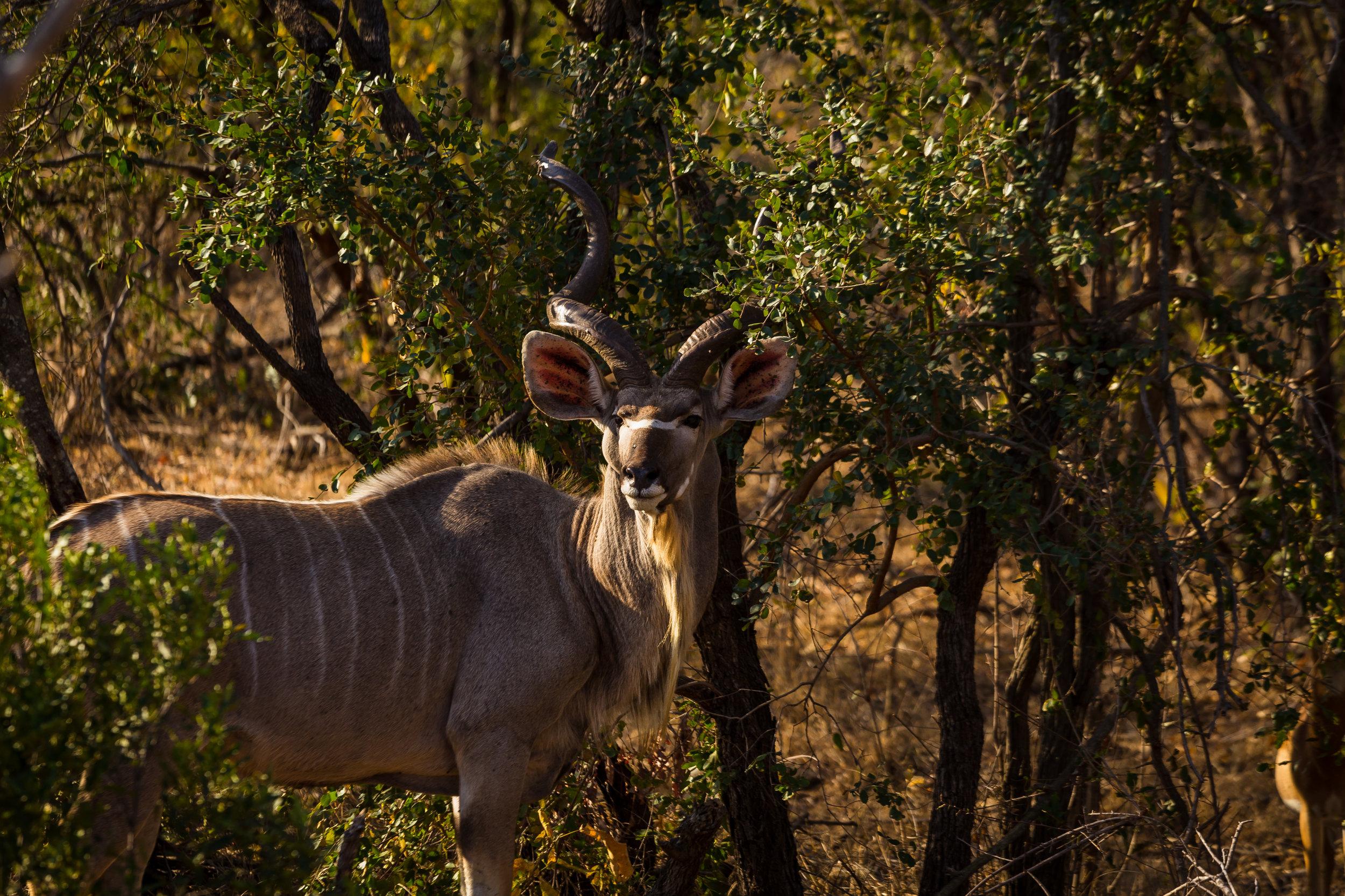 Kruger National Park World Challenge (21).jpg